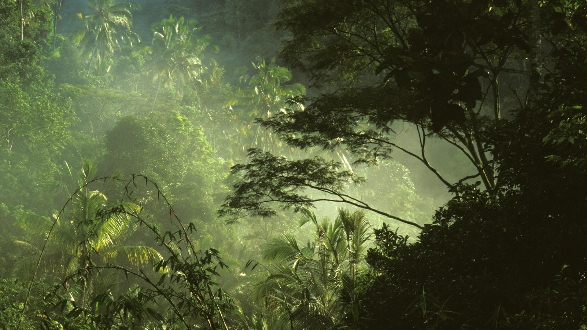Tropical Rainforest Wallpaper 58 Pictures