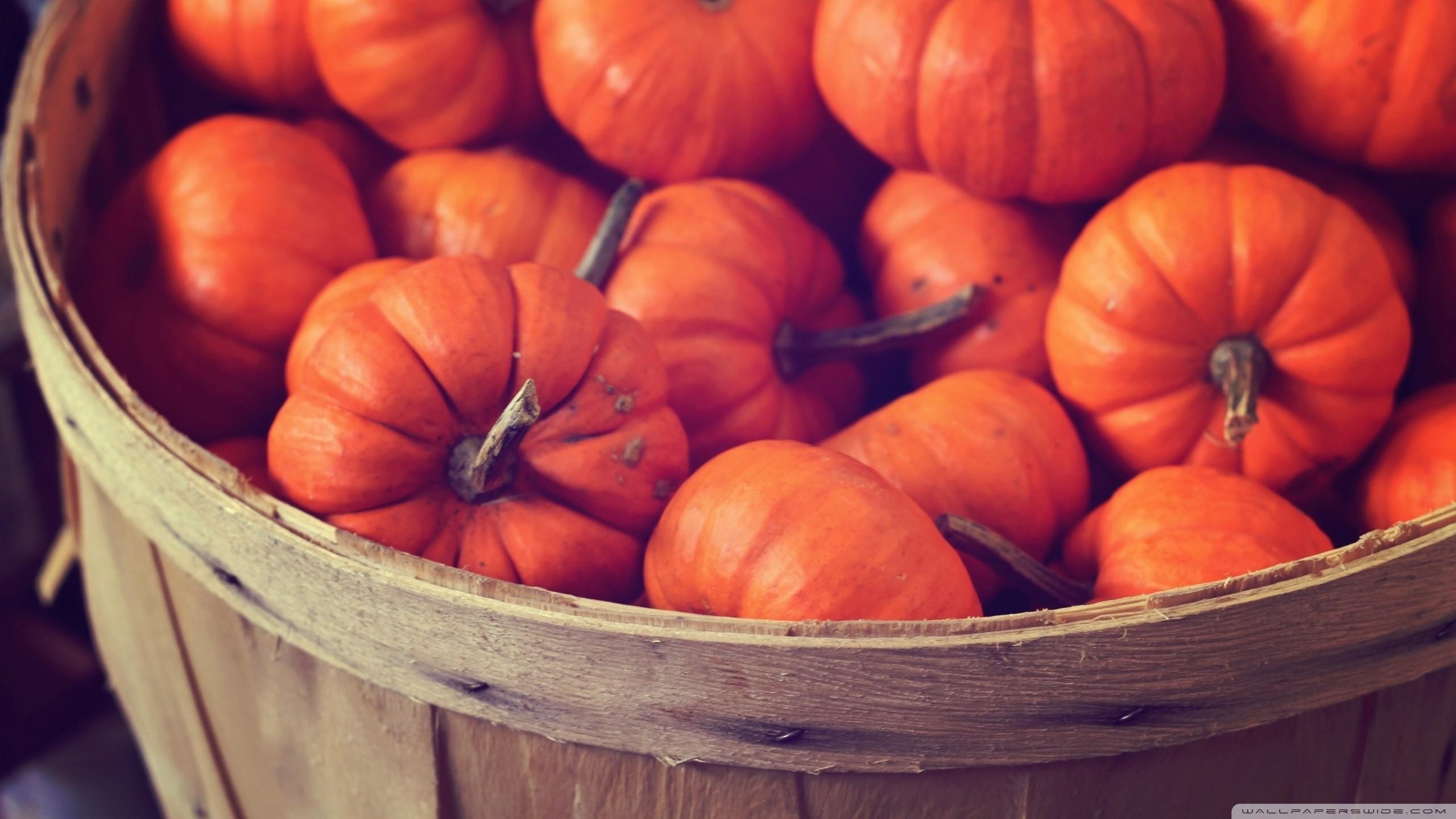 Hd Pumpkin Wallpaper 60 Pictures