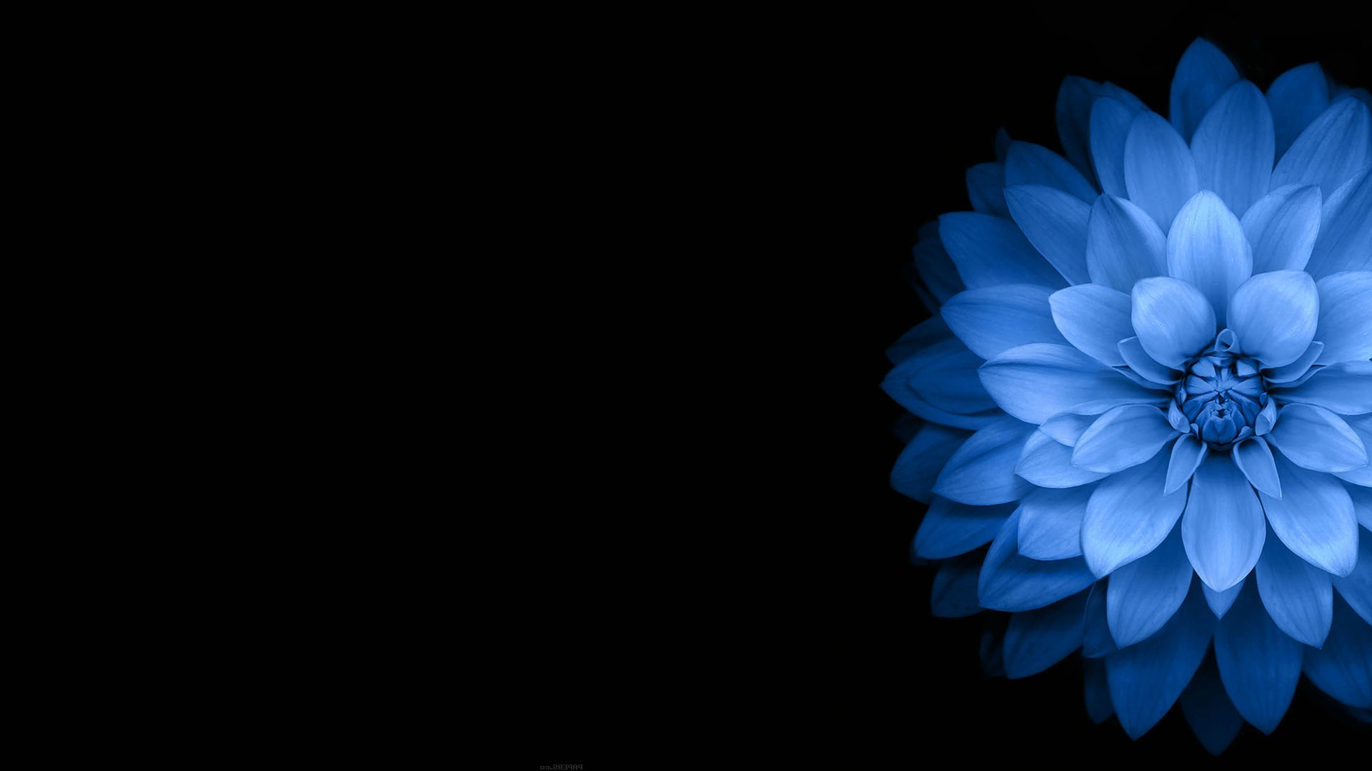 blue flower wallpaper 60 pictures