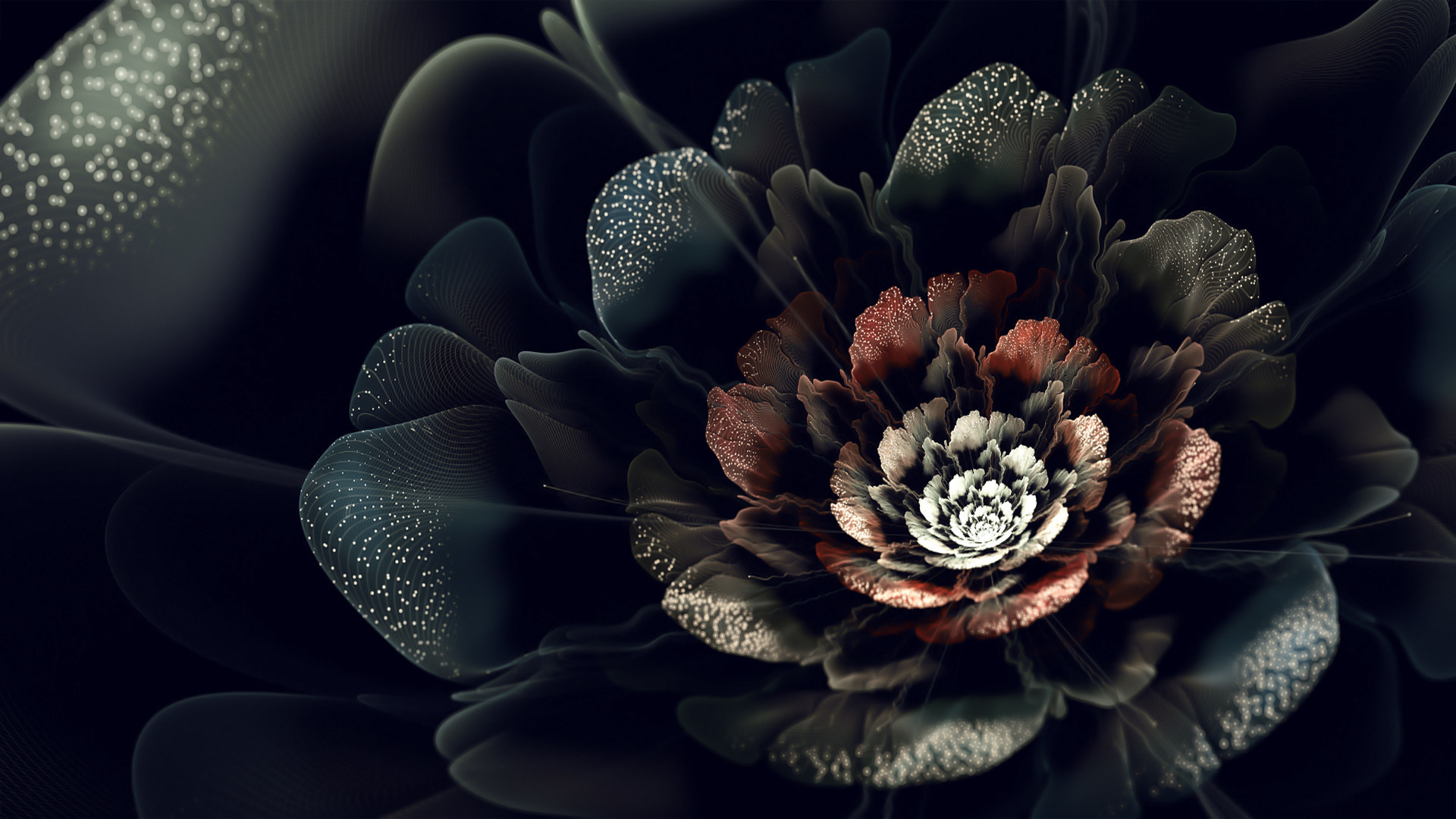 Black Rose Backgrounds 50 Pictures