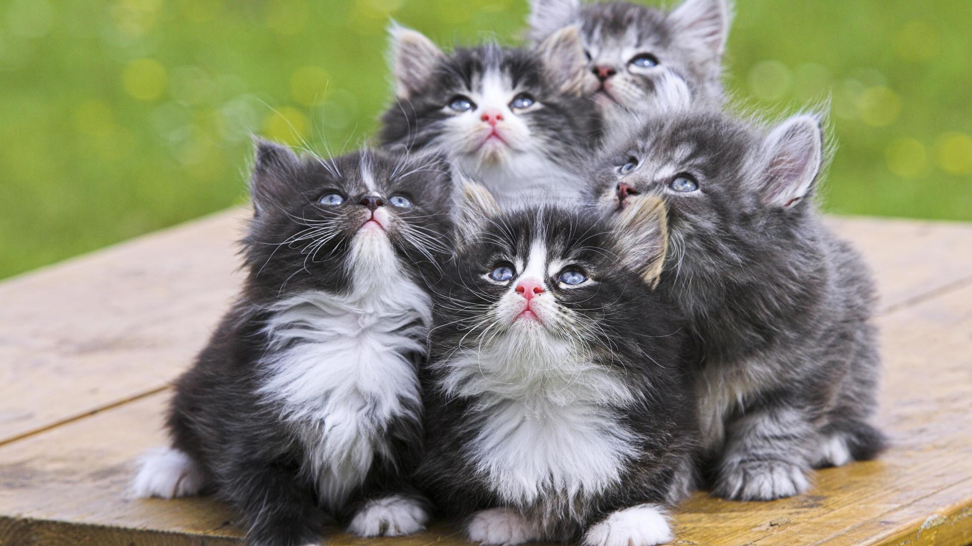 Three White Kittens In A Basket wallpaper animals Wallpaper