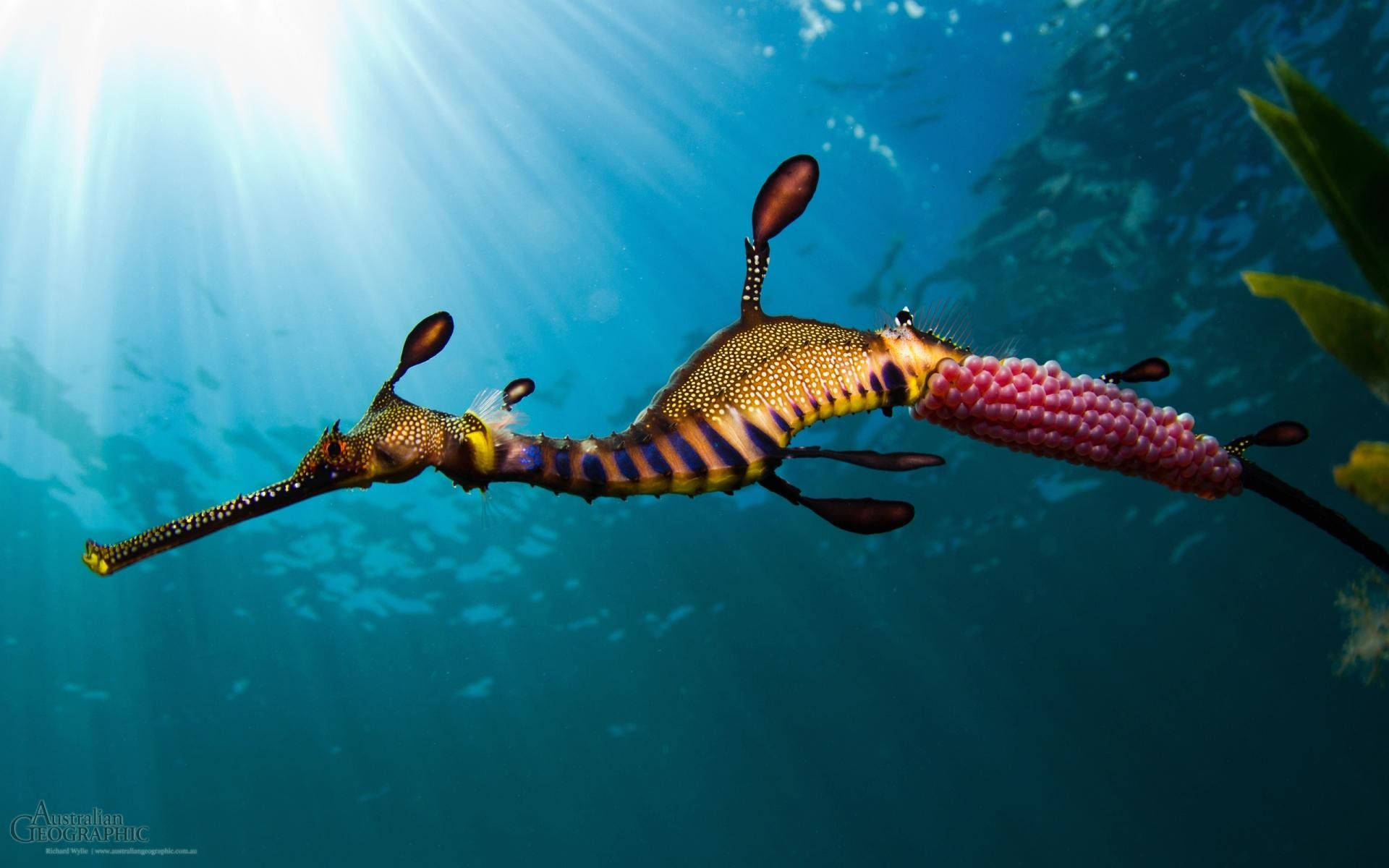 1920x1080 You Can Download Sea Creature Hd Wallpapers