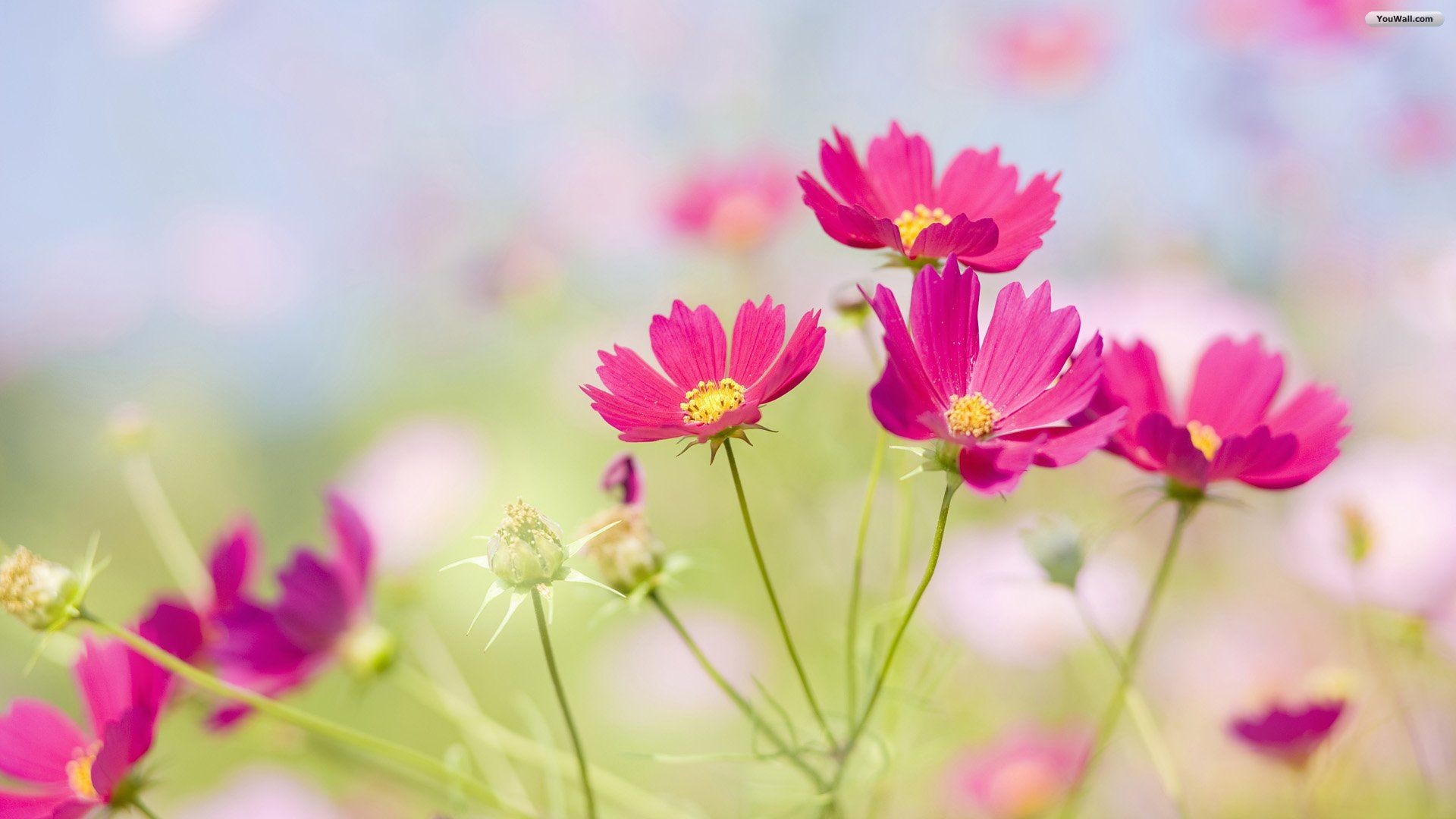 pretty flowers backgrounds (52+ pictures)