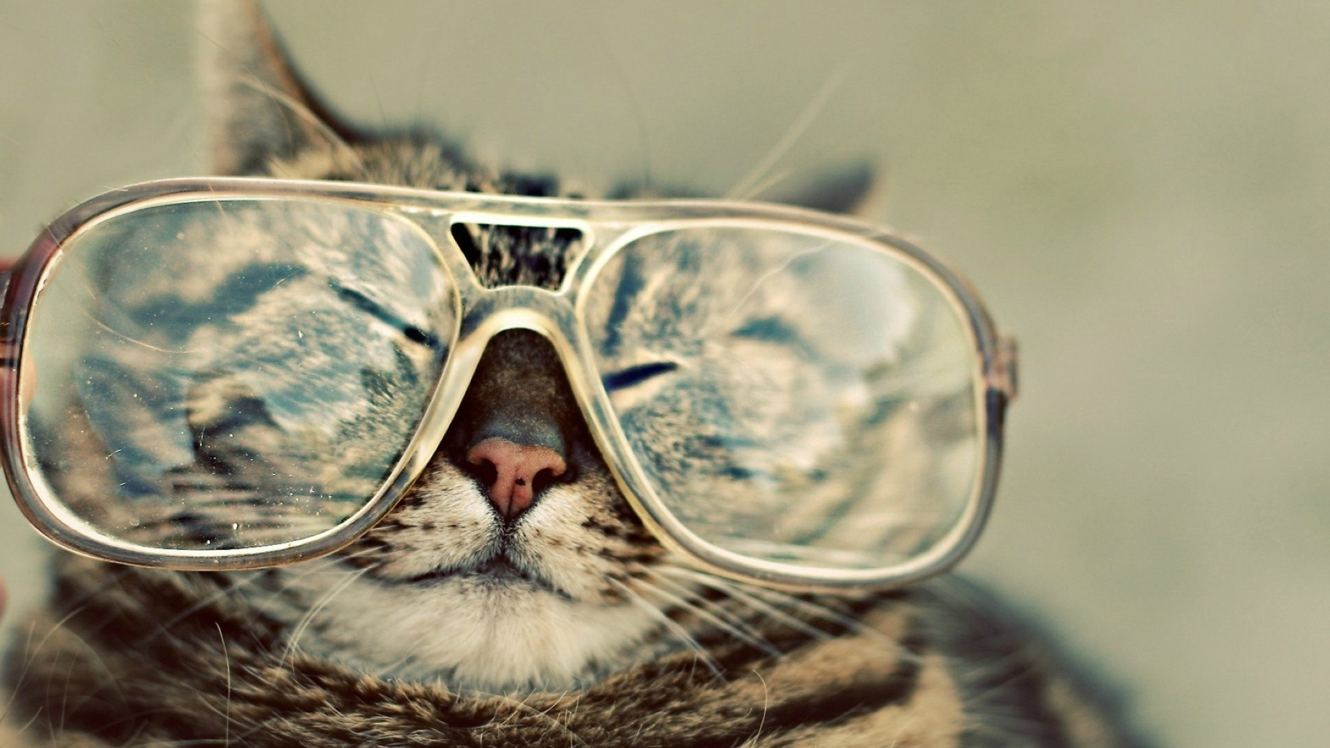 Funny Animal Desktop Backgrounds 61 Pictures
