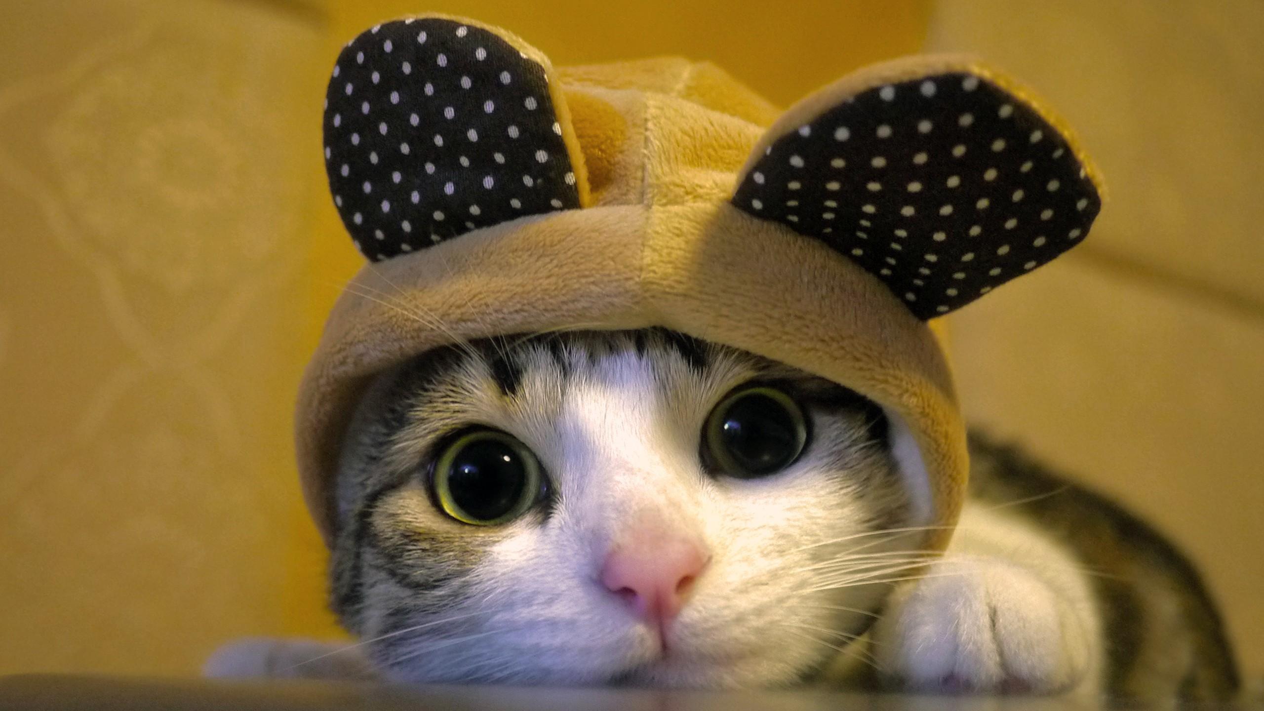 ... cute cat wallpaers (3) ... 2560x1440