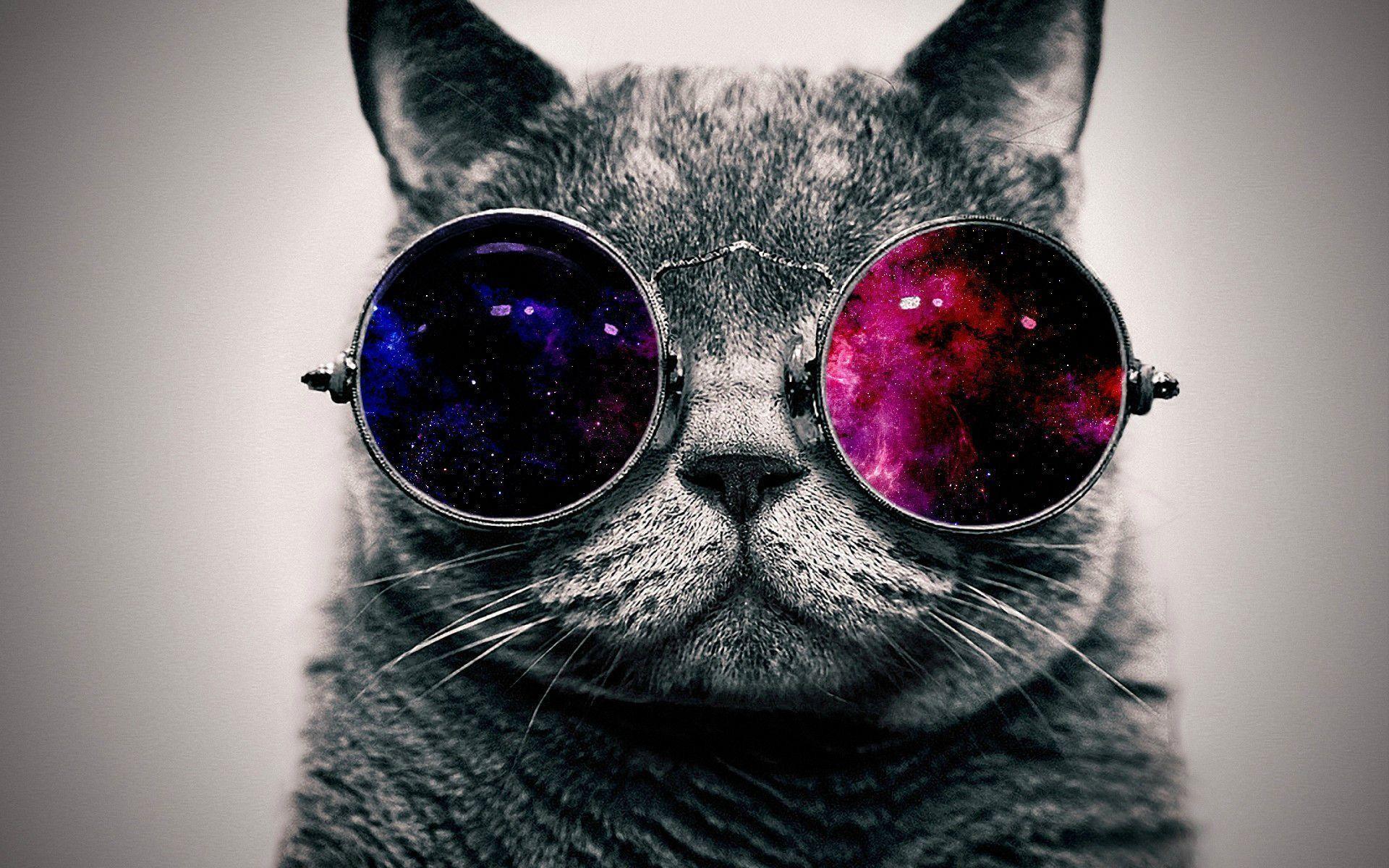 Download Cool Cat Wallpaper | Full HD Wallpapers 1920x1200