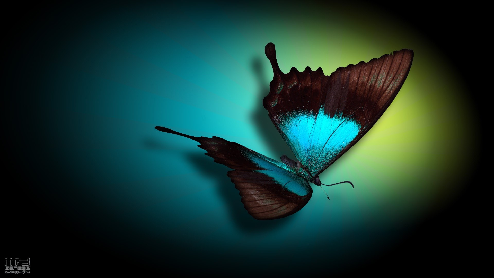 Blue Butterfly Wallpaper (75+ pictures)