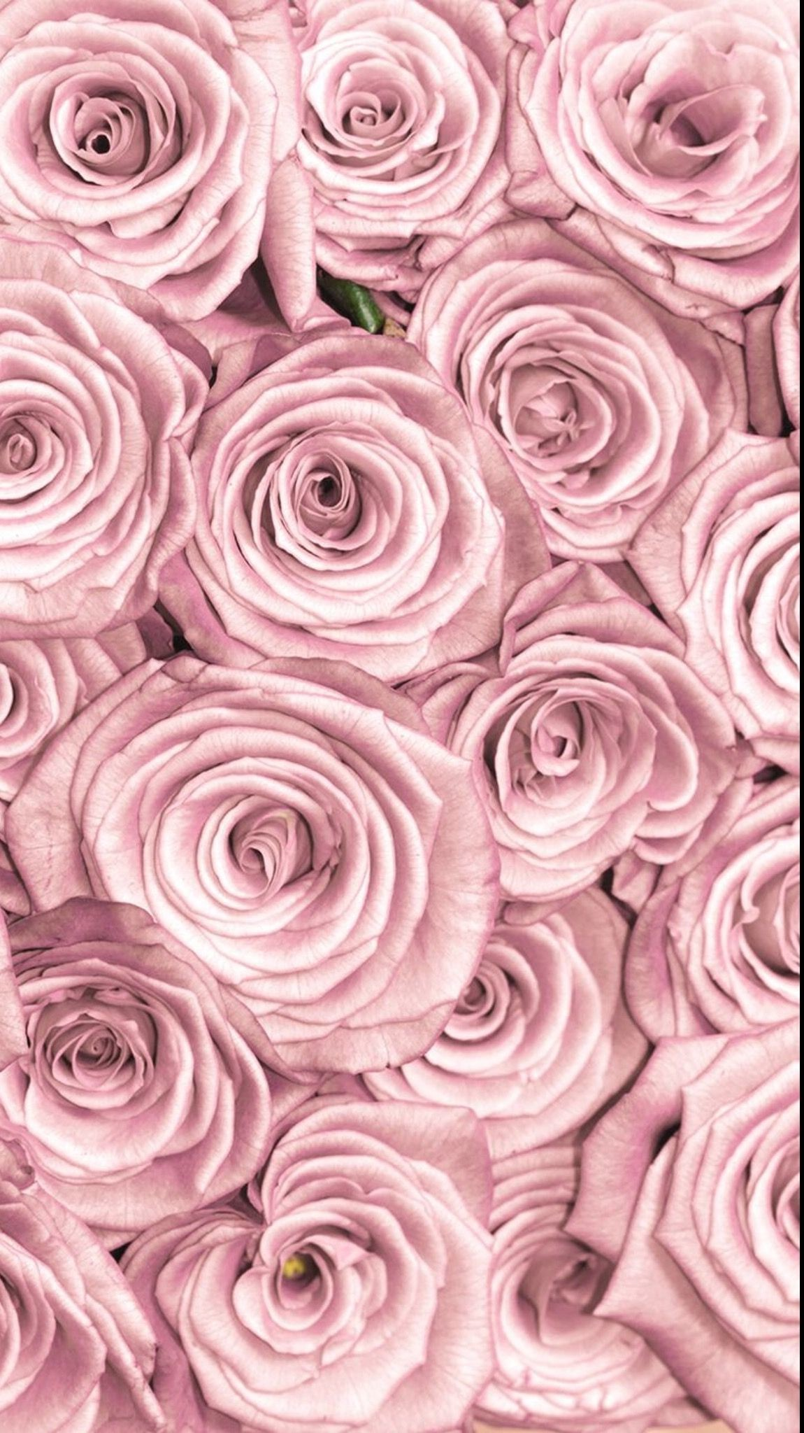 Rose Wallpaper (61+ pictures)