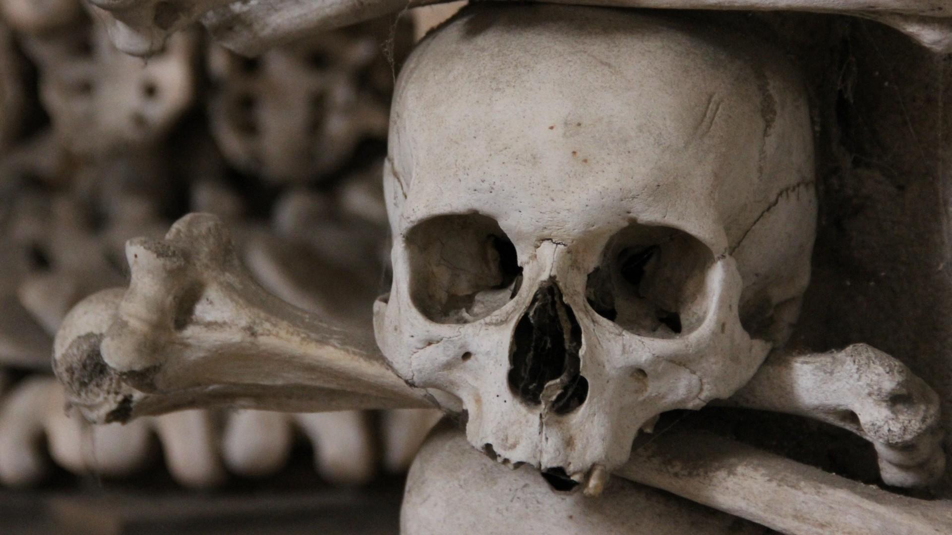 Skulls And Bones Wallpaper 63 Pictures