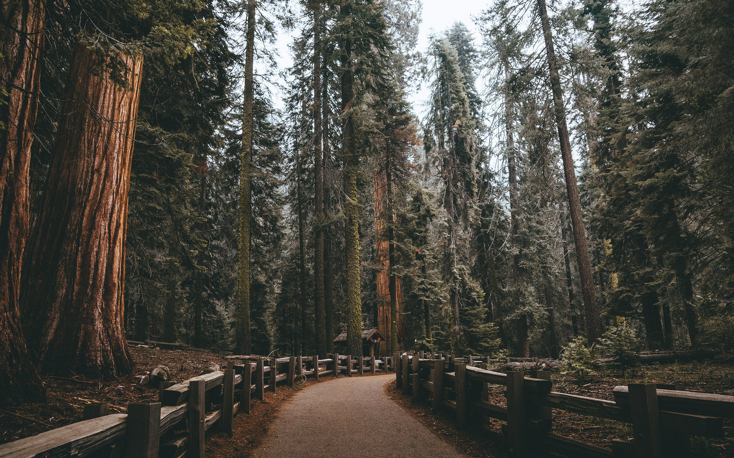 Redwood Forest Wallpaper (61+ pictures)