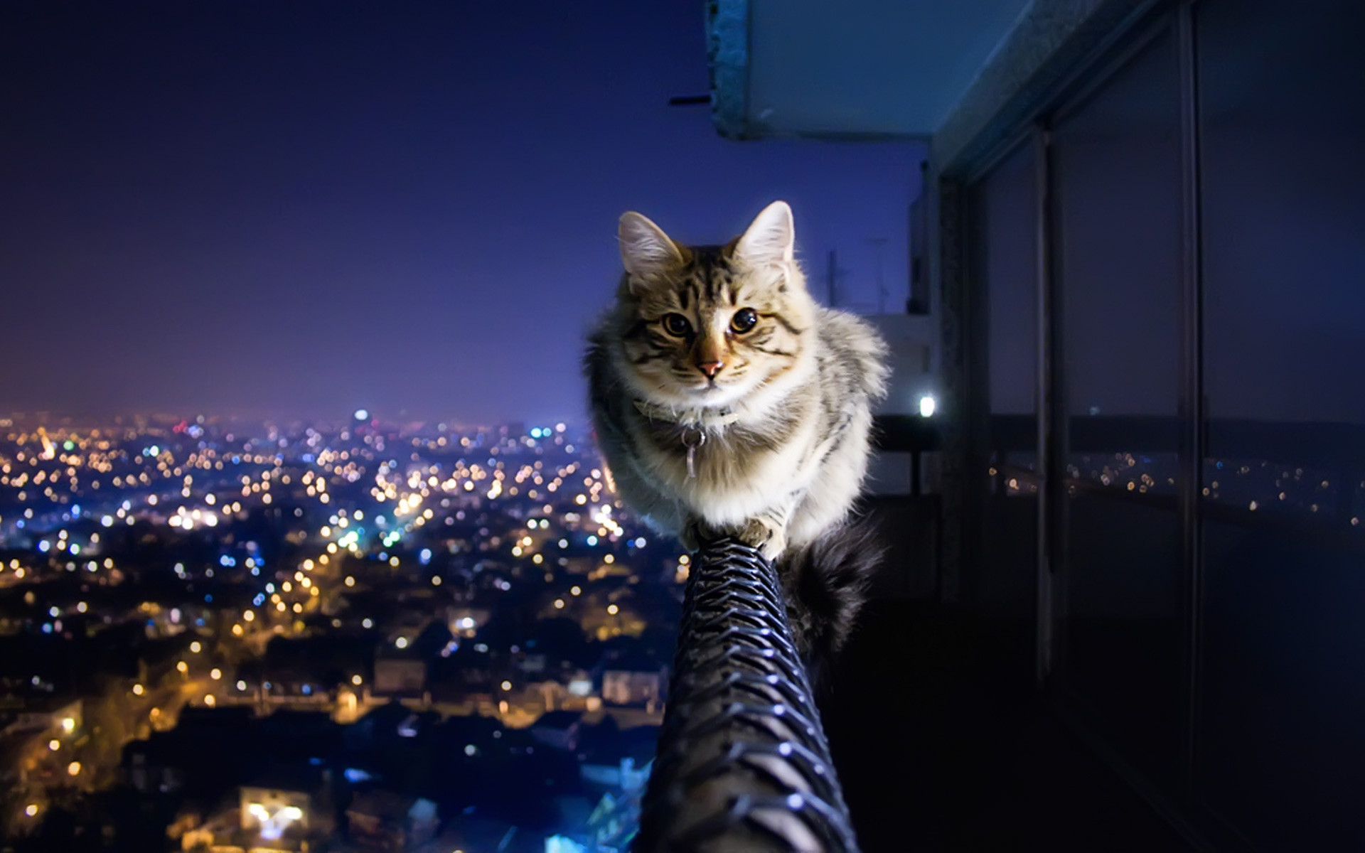 ... HD Cat Wallpapers 1920x1080 (69 images) ... 1920x1200