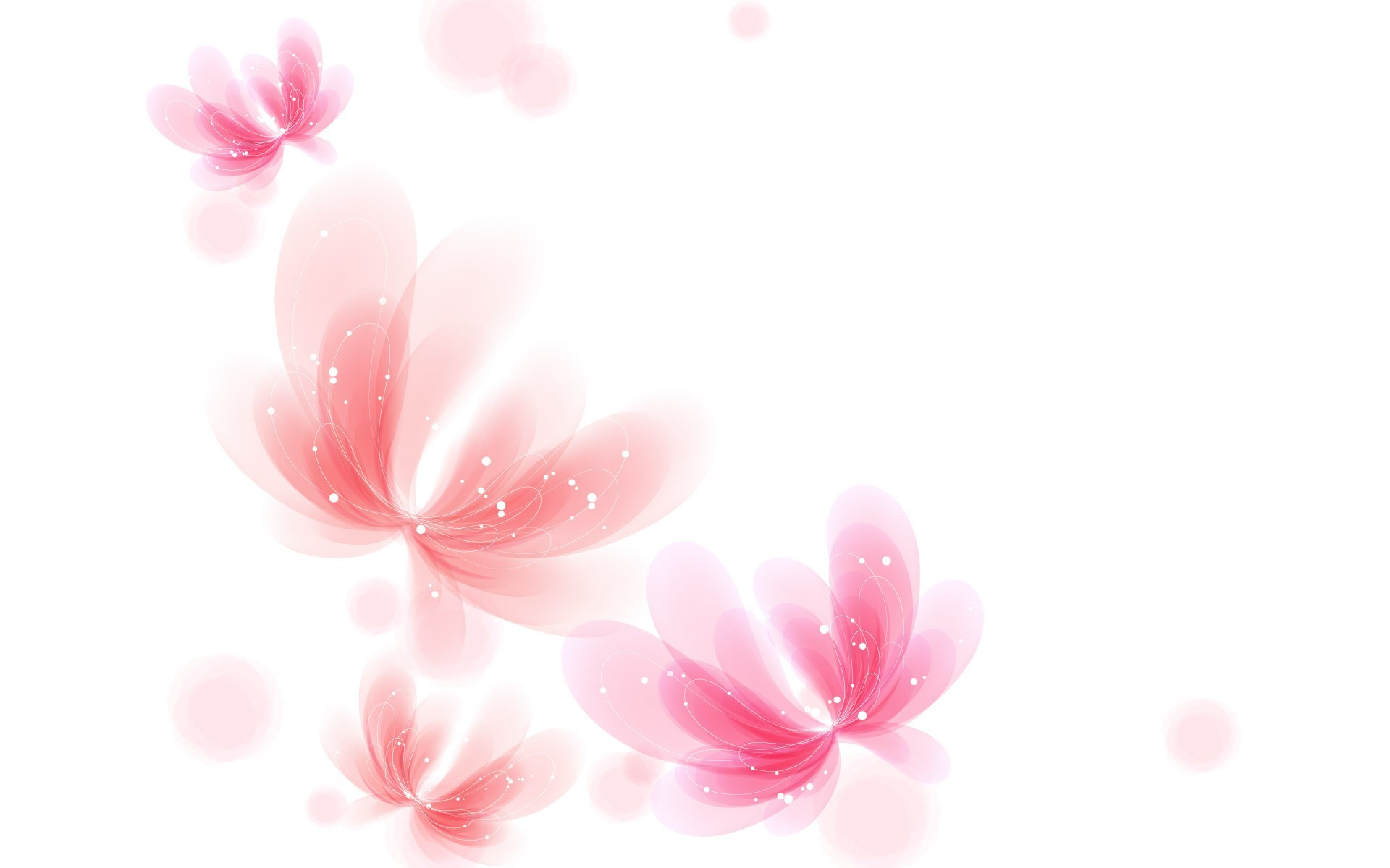 Pink Flower White Background 39 Pictures