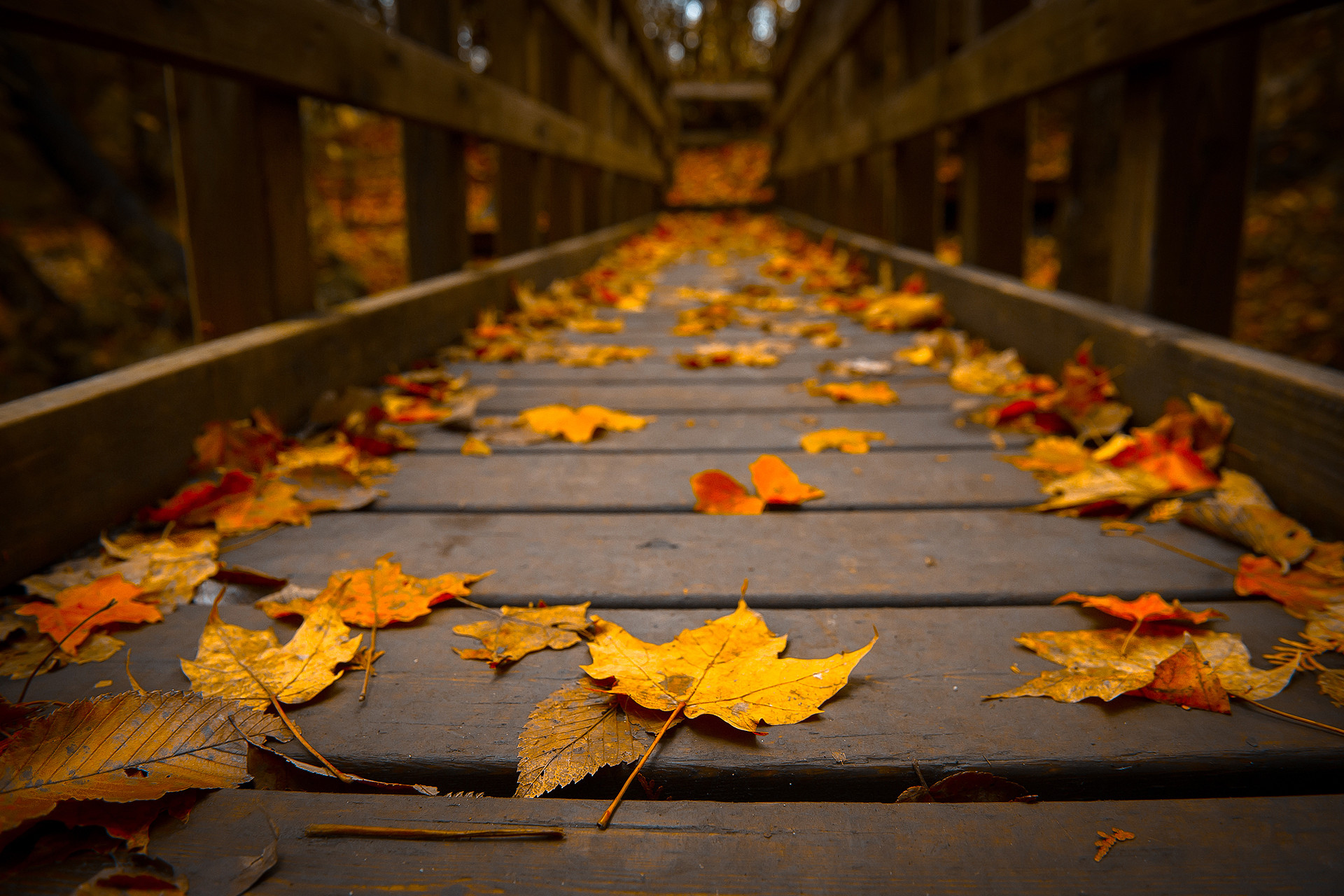 Autumn Hd Wallpaper 75 Pictures