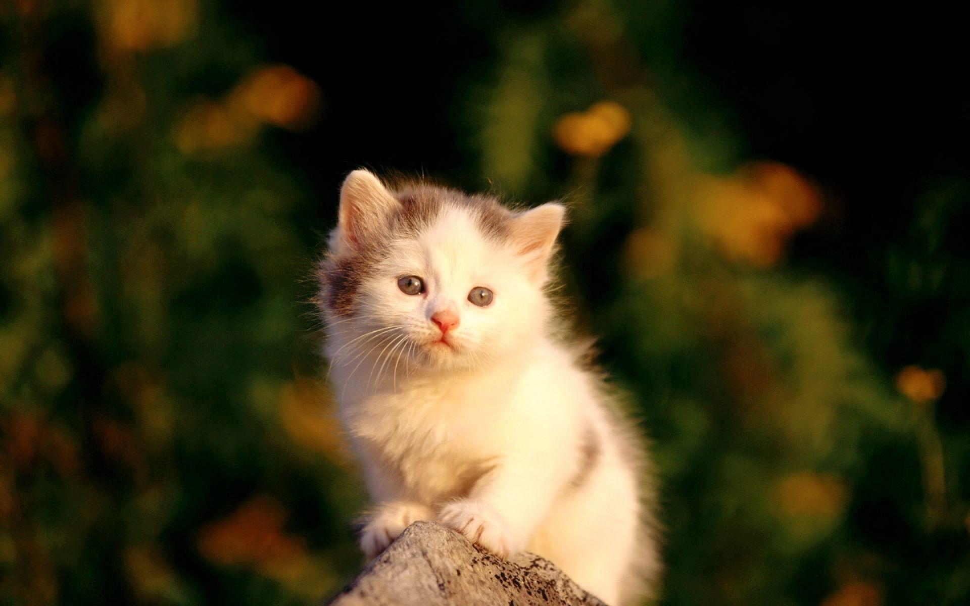 Kitten Wallpaper 77 Pictures