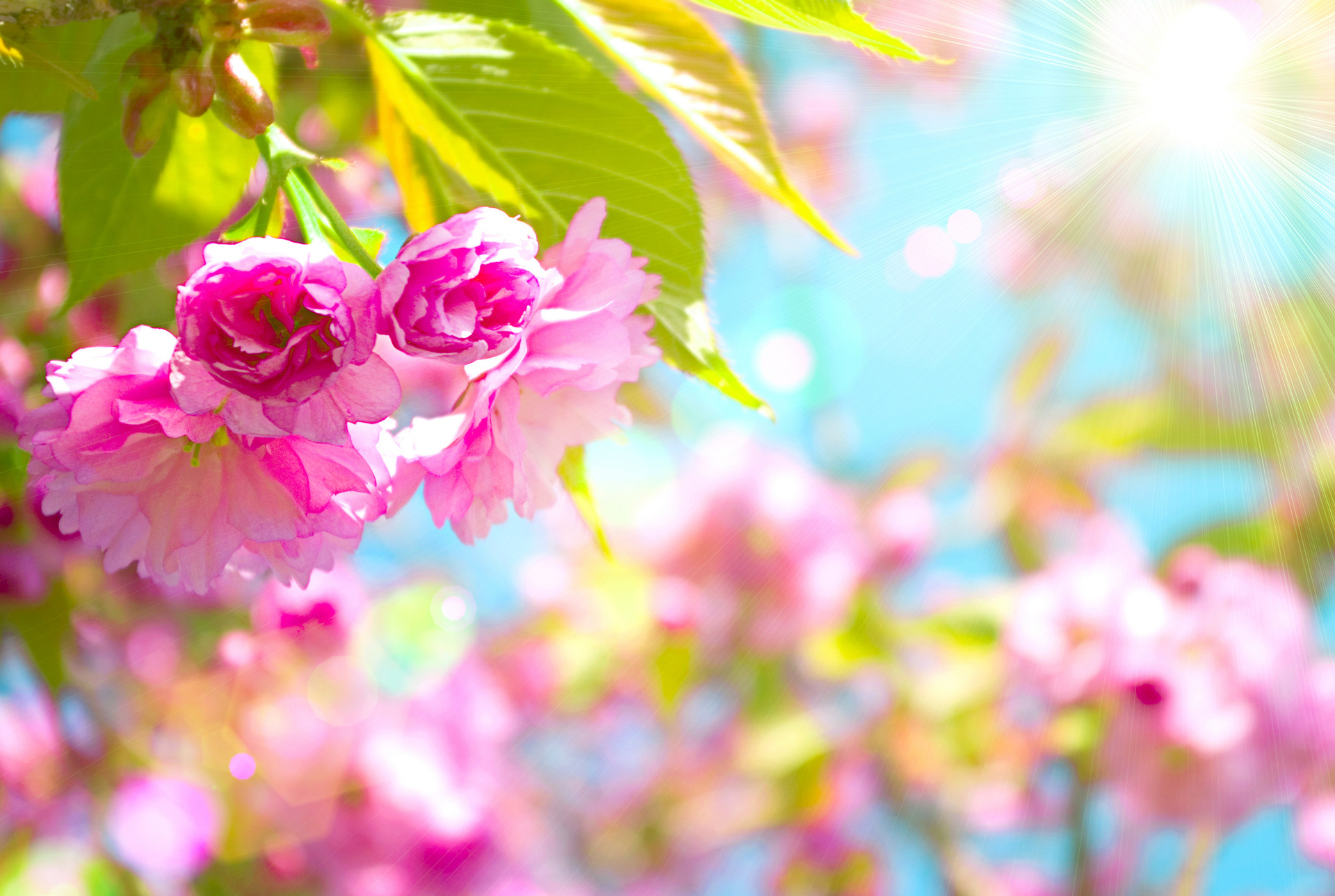 Spring Backgrounds For Computer 59 Pictures