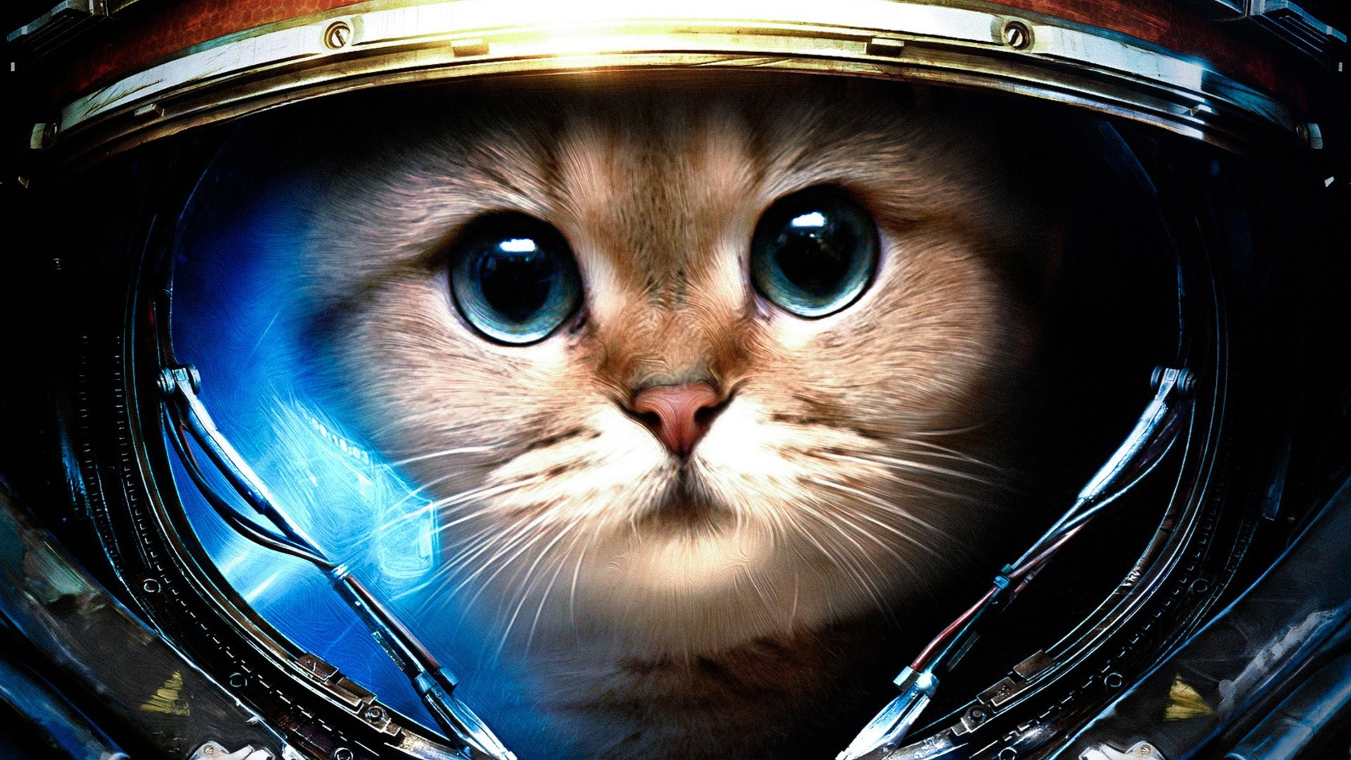 Cool Cat Backgrounds 59 Pictures