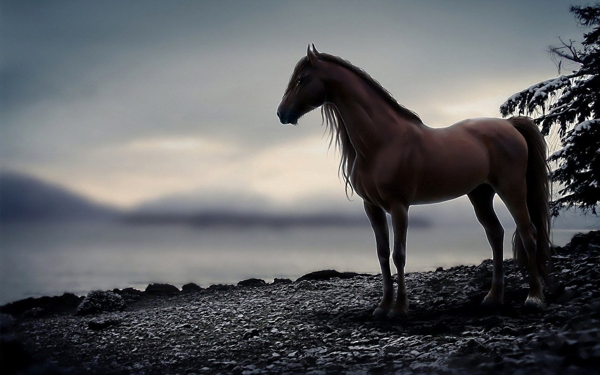 Horse Background Images 61 Pictures