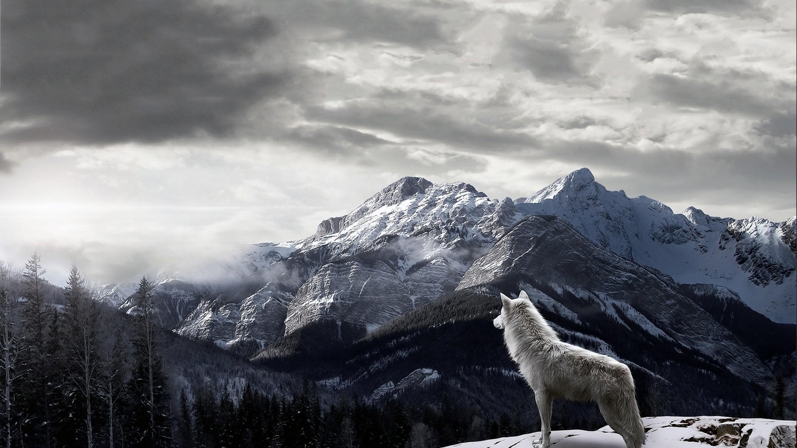 1920x1080 1920x1080 Woods Wolves Wallpaper 1920x1080 Woods, Wolves