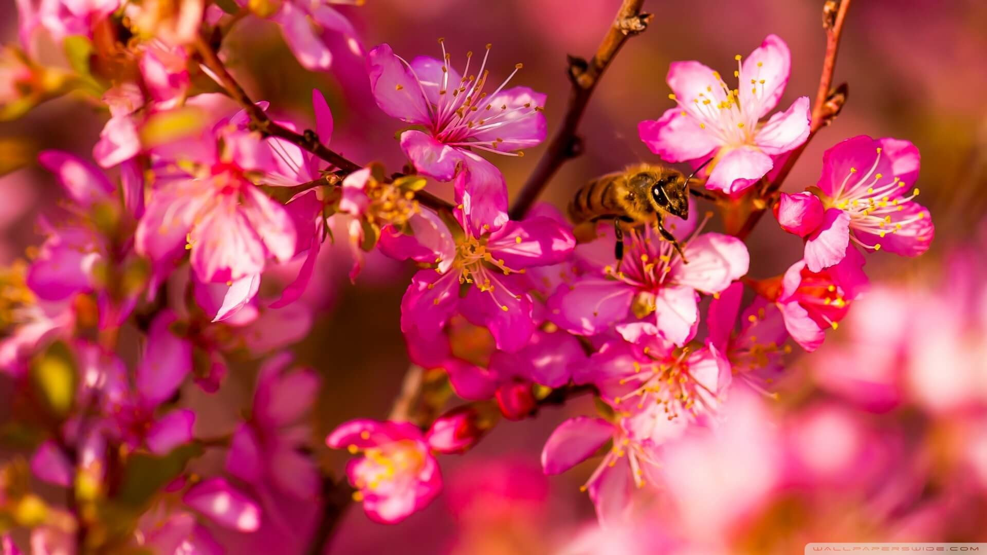 Spring Wallpapers (74+ pictures)