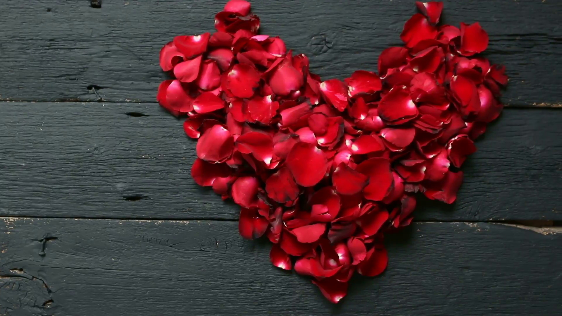 Red Rose Background 33 Pictures