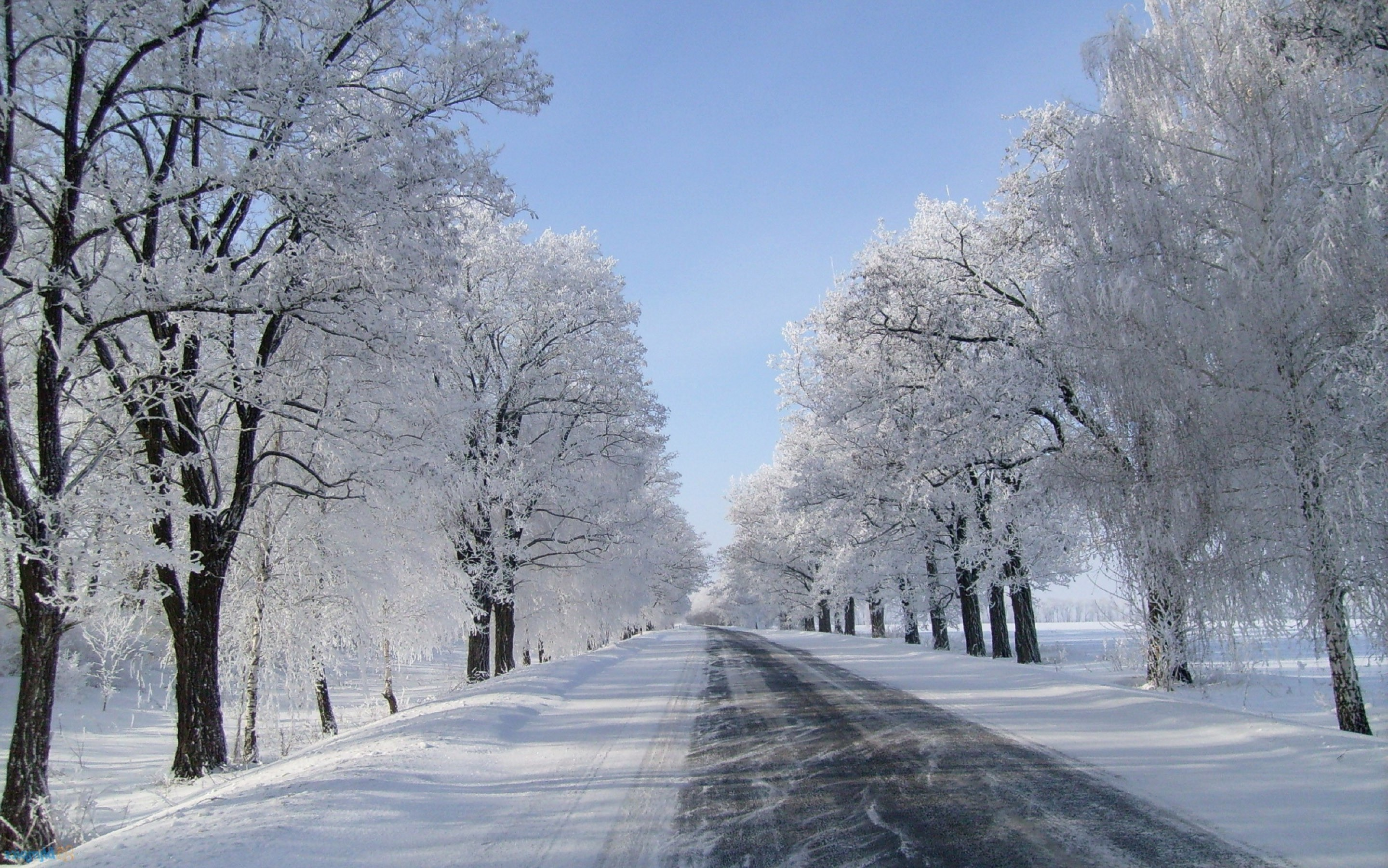 Winter Snow Background 50 Pictures