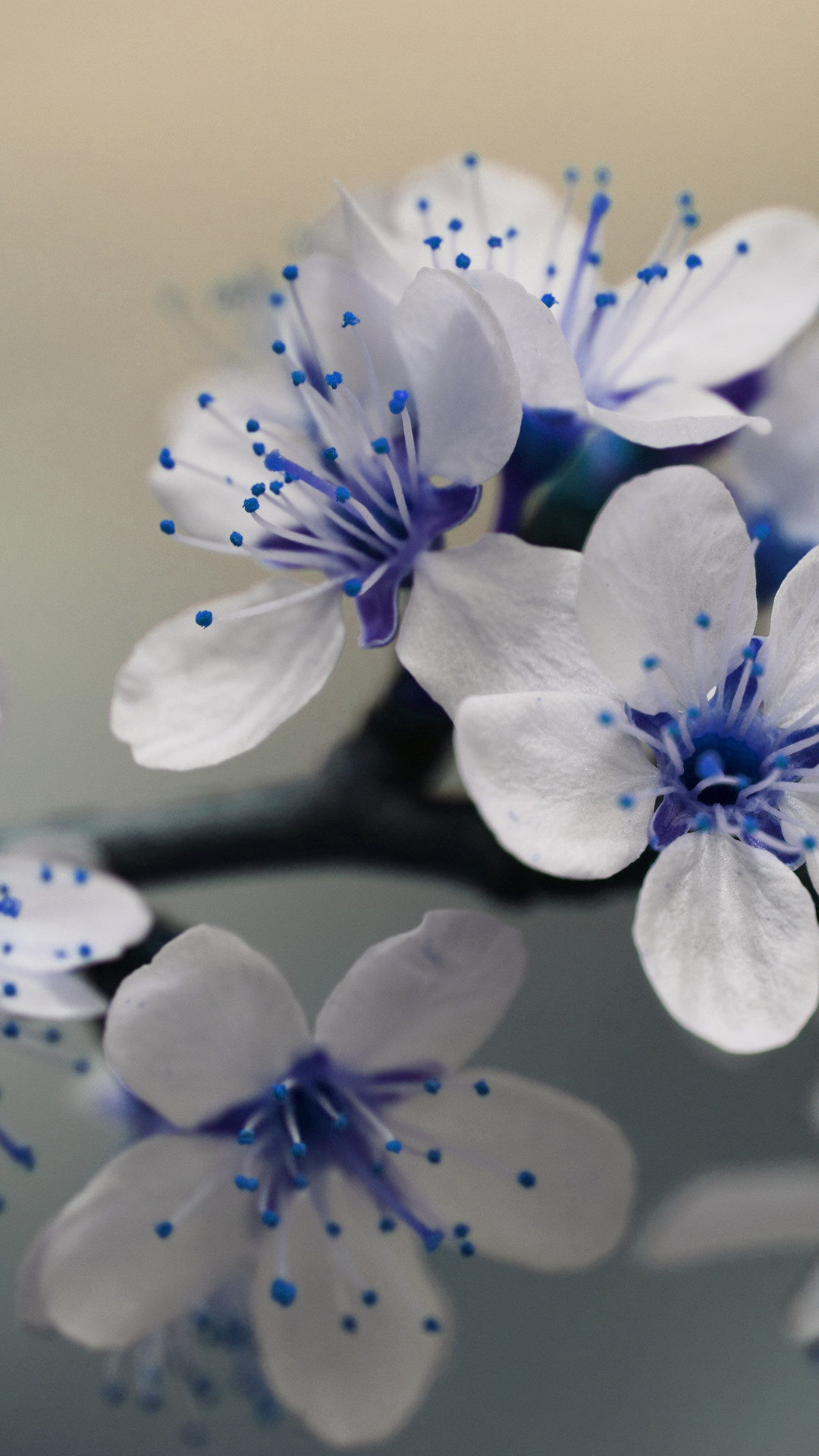 Blue Flowers Wallpaper 62 Pictures