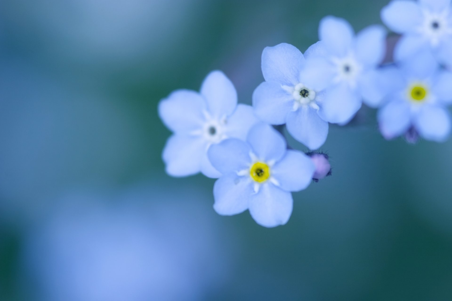 Blue flowers background 53 pictures 1920x1080 blue flowers background izmirmasajfo