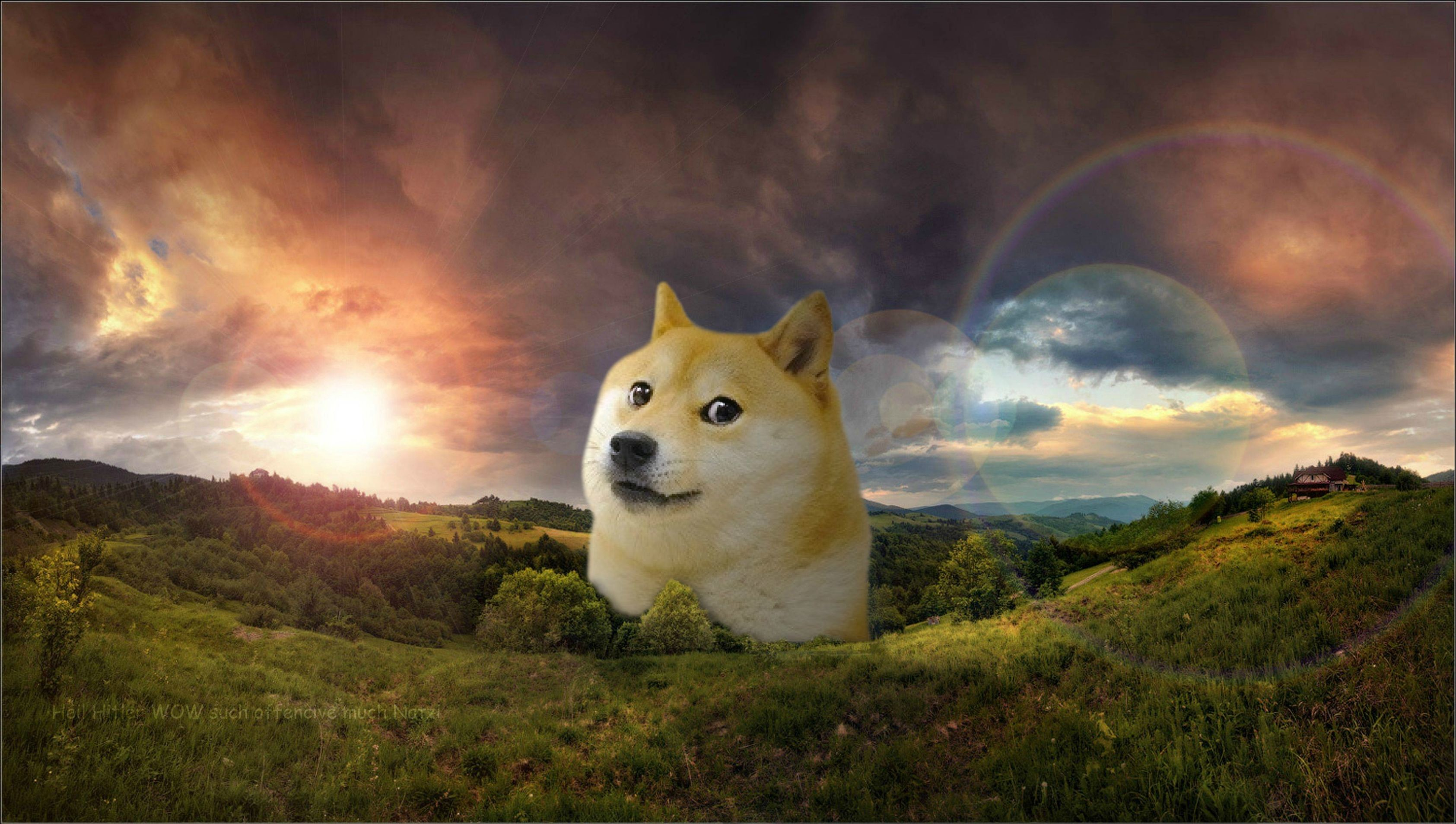 Doge Wallpapers 75 Pictures