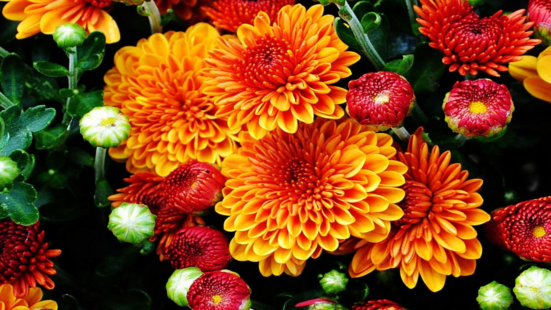 Fall Flowers Wallpaper (48+ pictures)