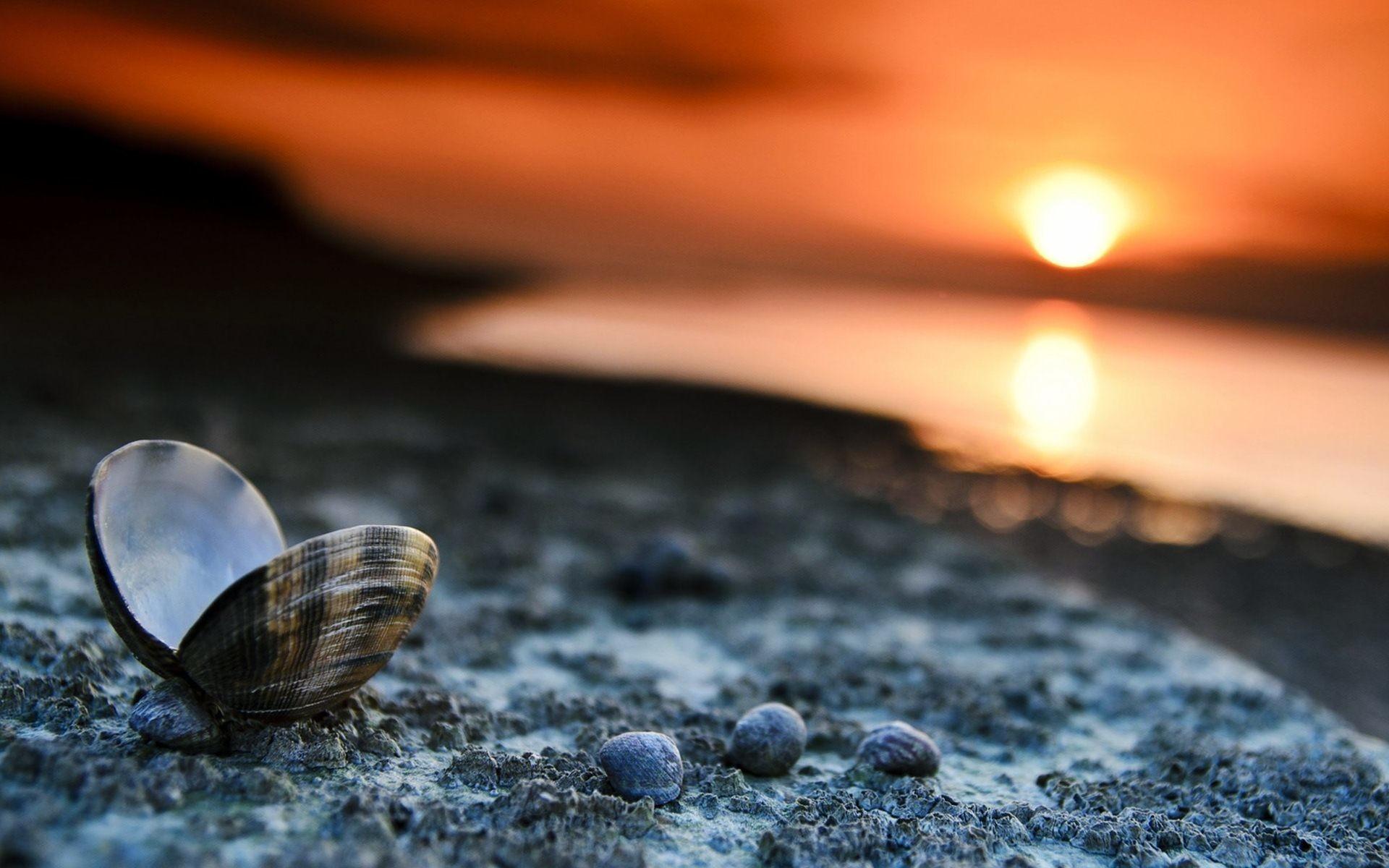 Sea Shells Wallpaper 53 Pictures