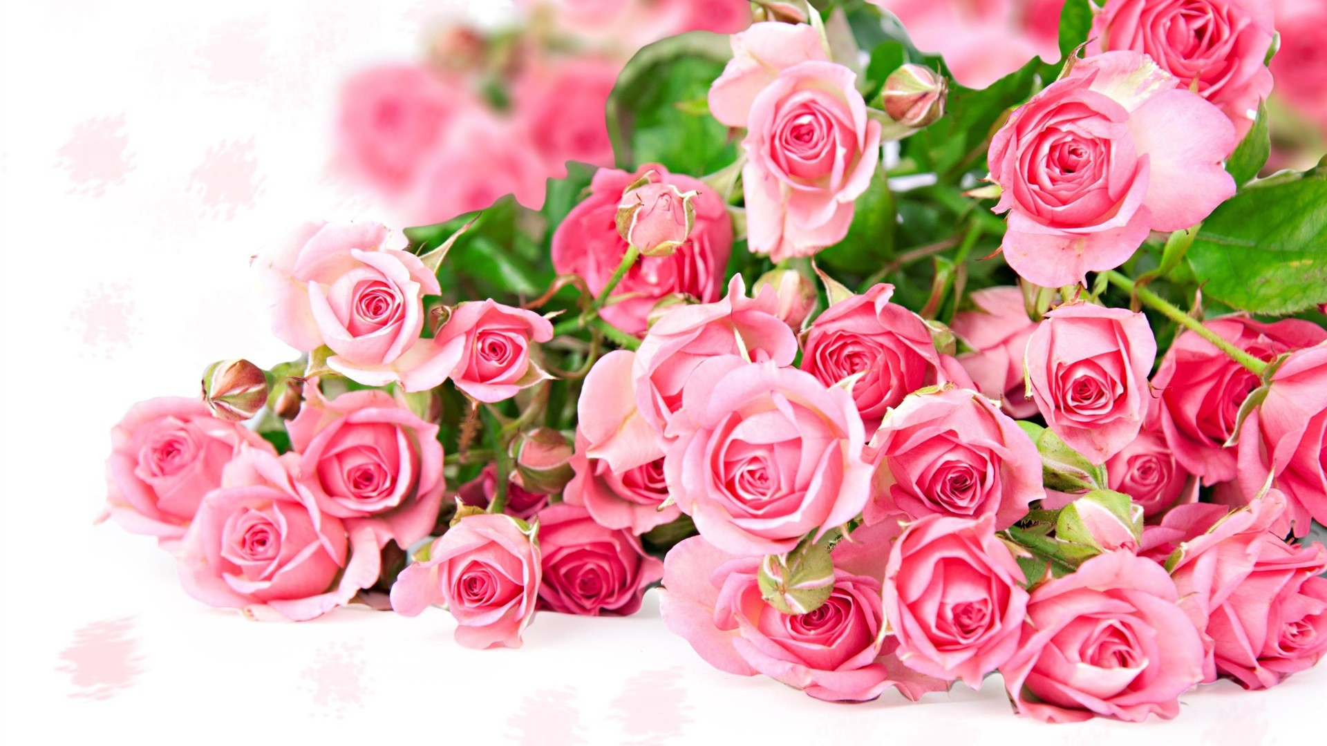 Rose Pink Wallpaper 61 Pictures