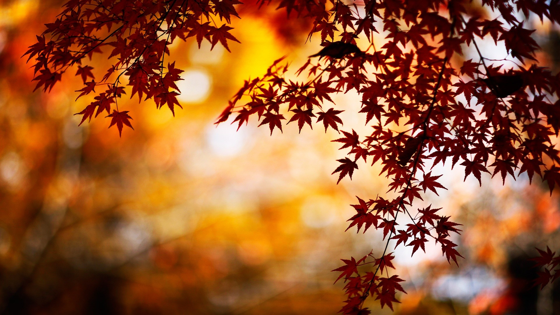 Fall Background Wallpaper 74 Pictures