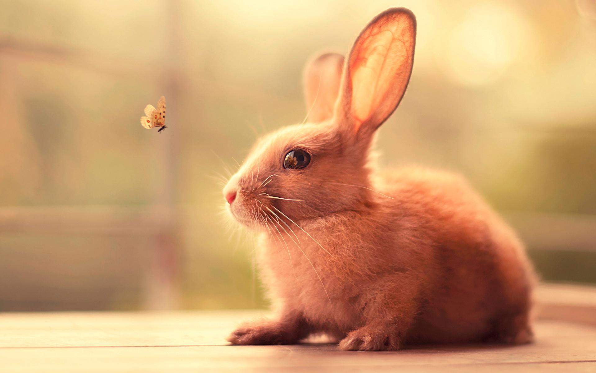 Bunny Wallpaper 67 Pictures