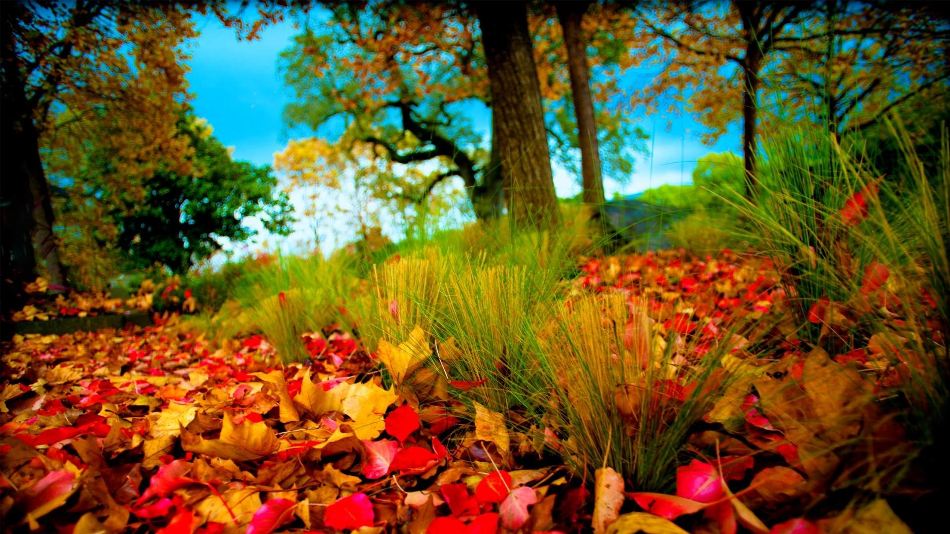 Hd Nature Wallpapers 1080p 74 Pictures