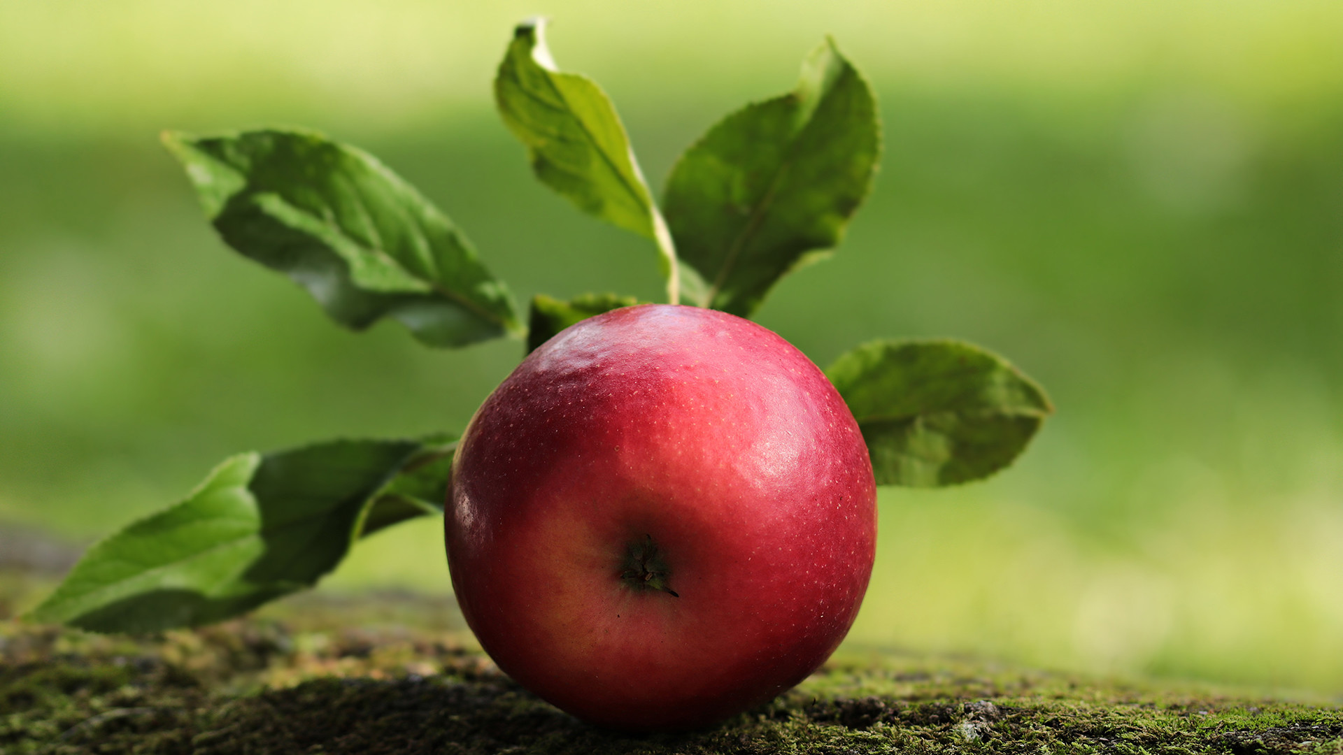 Red Apple Wallpaper 65 Pictures