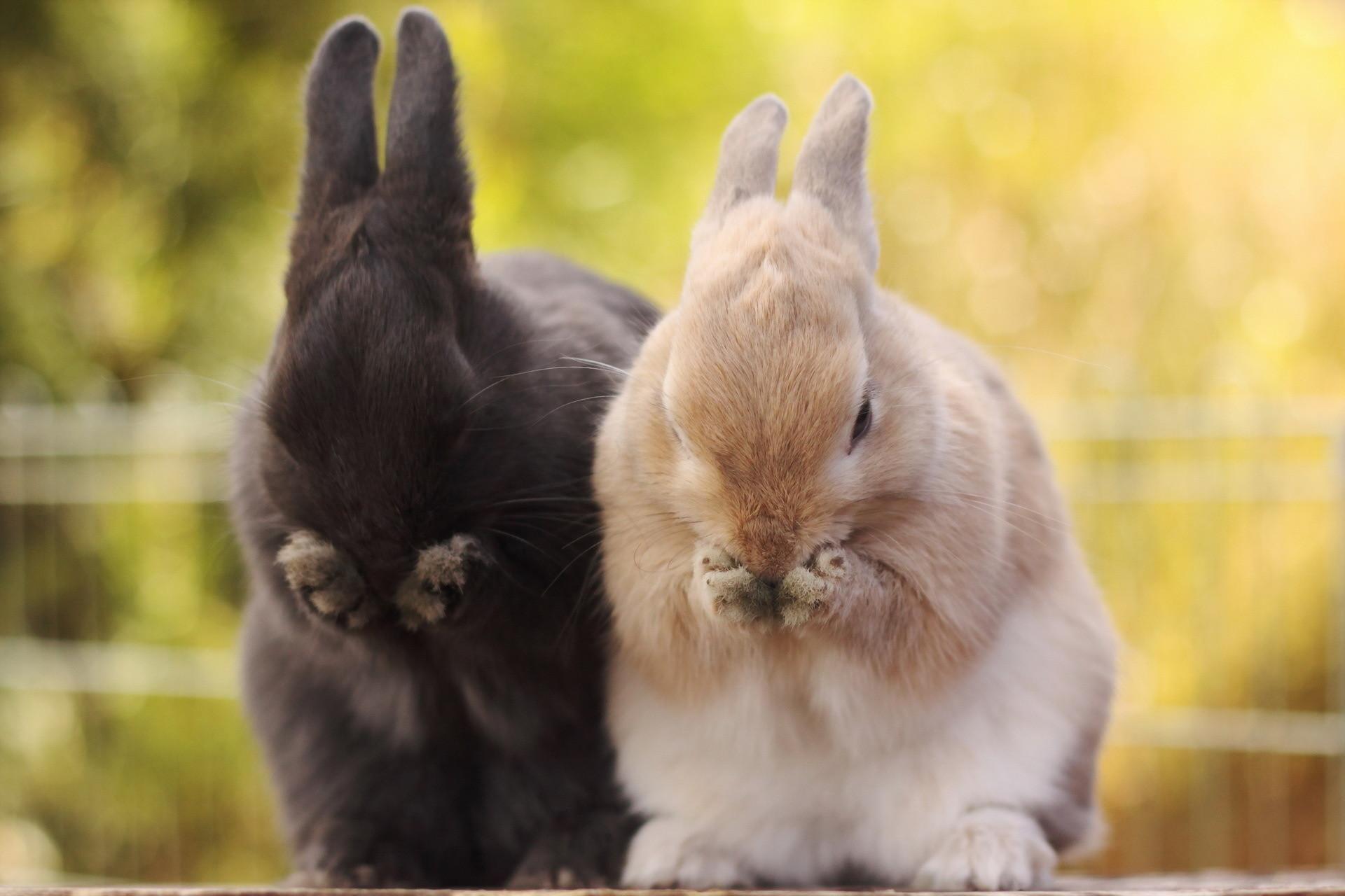 1920x1080 Baby rabbit wallpapers | Baby Animals