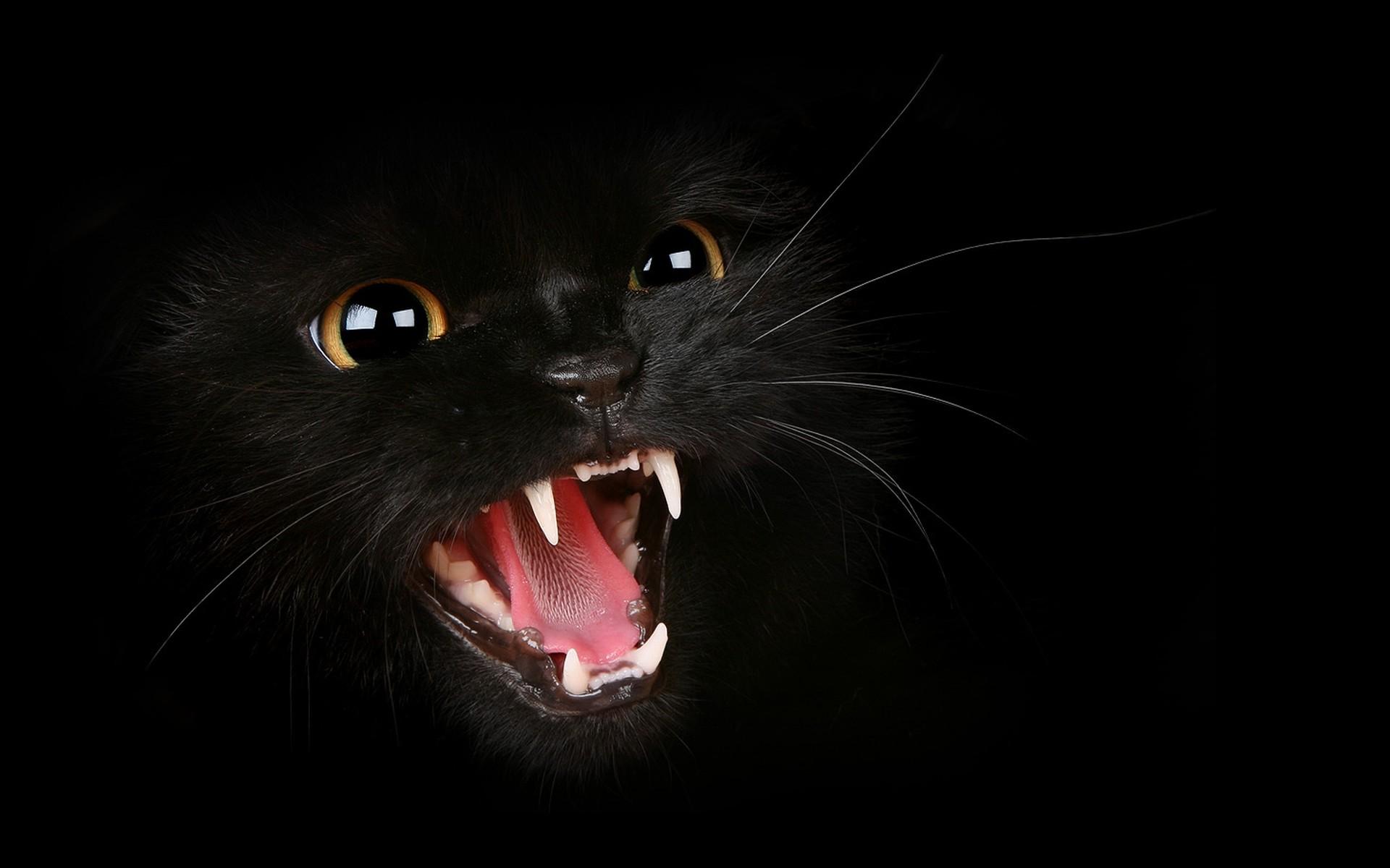 Black Cat Pics 1920x1200