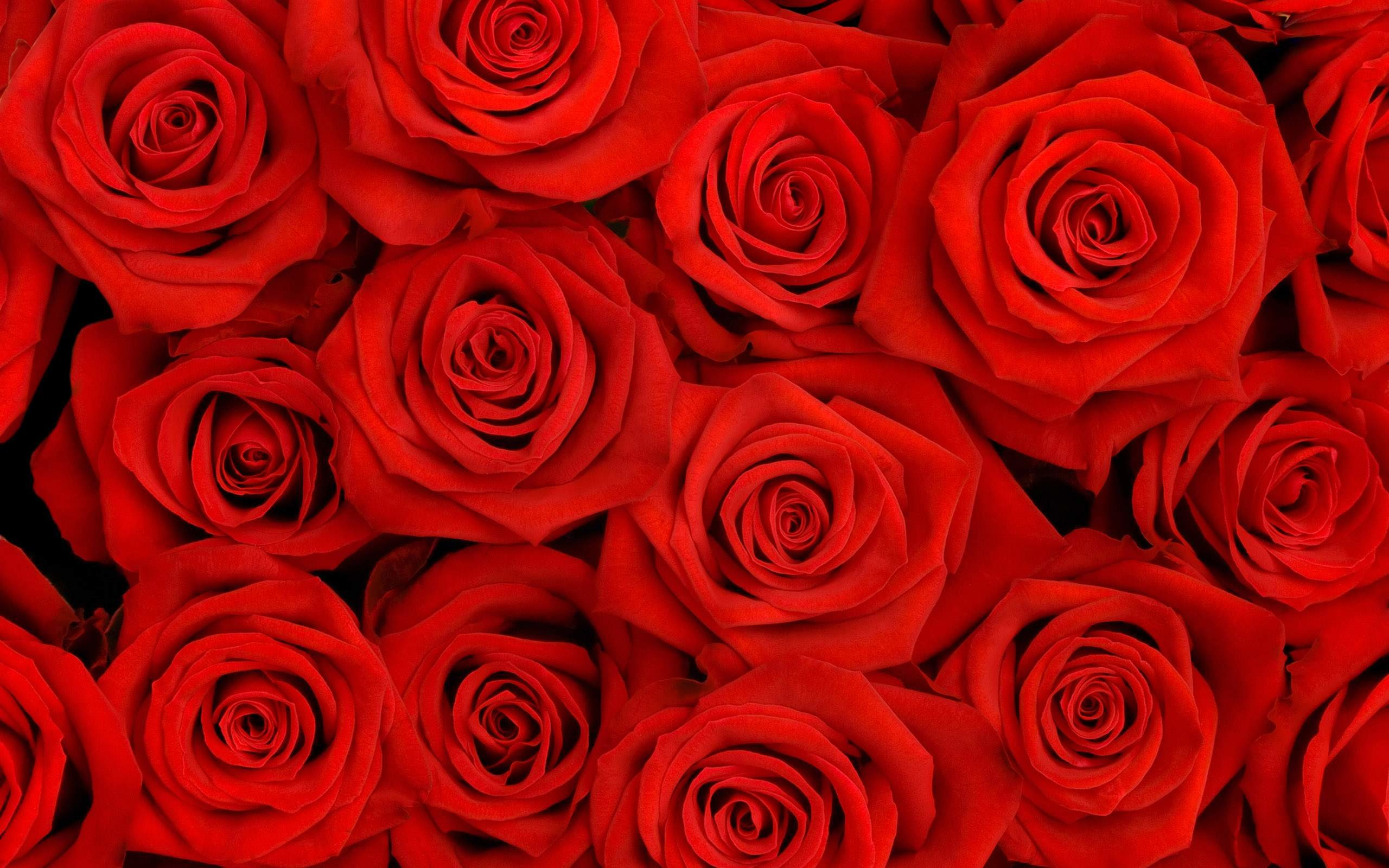 Red Flower Wall Paper Underfontanacountryinncom