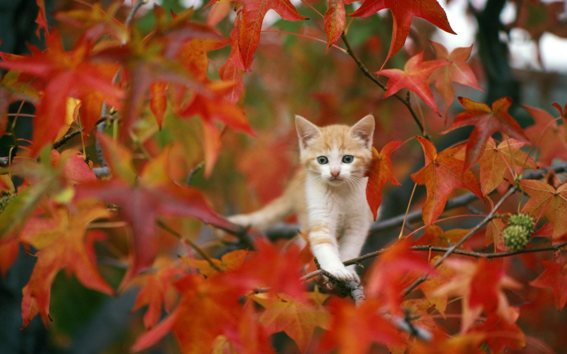 Cute Fall Wallpaper 59 Pictures