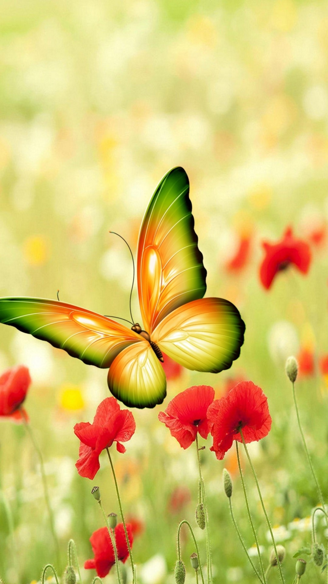 Butterfly Wallpaper 70 Pictures