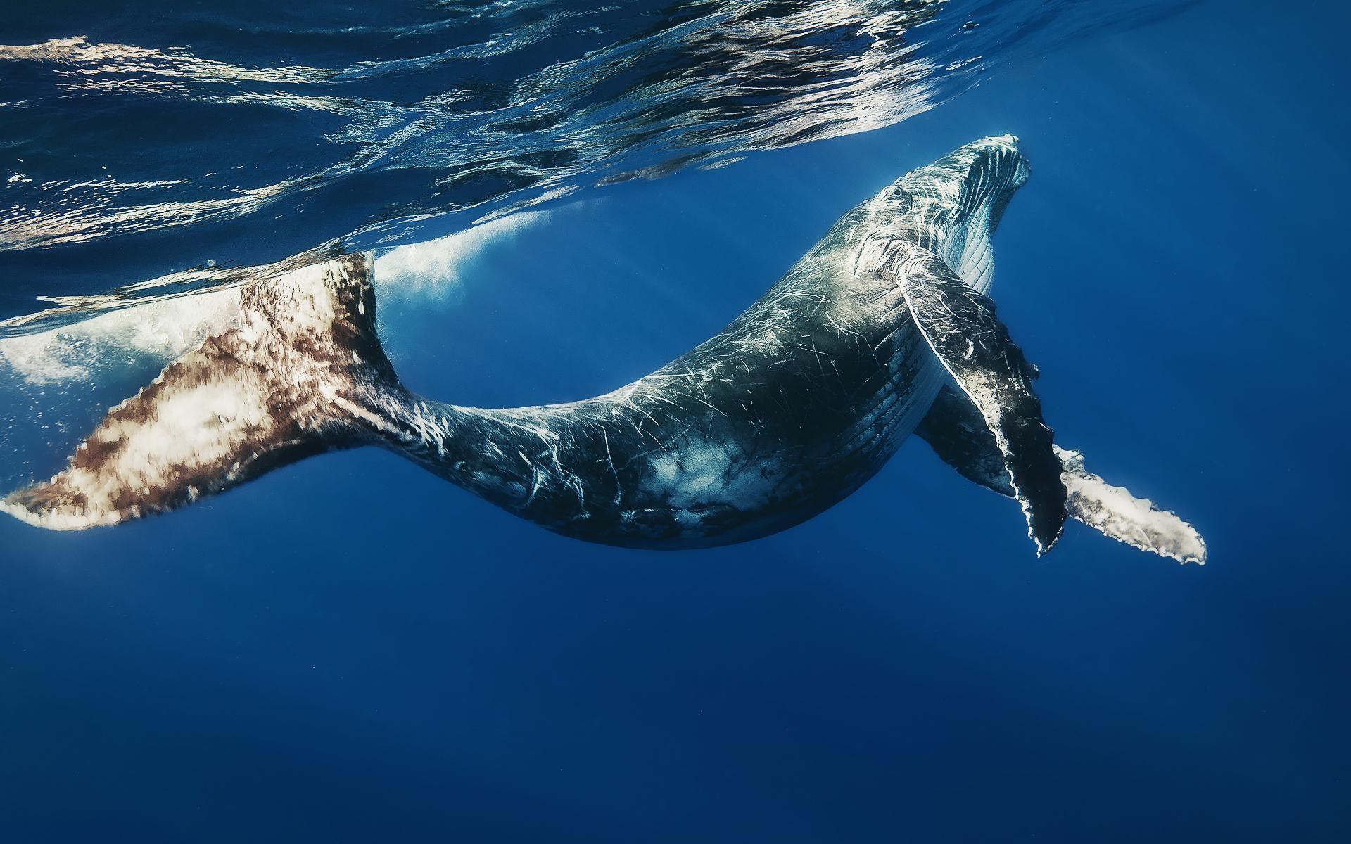 Galaxy S8 Whale Wallpaper 4k Best Hd Wallpaper