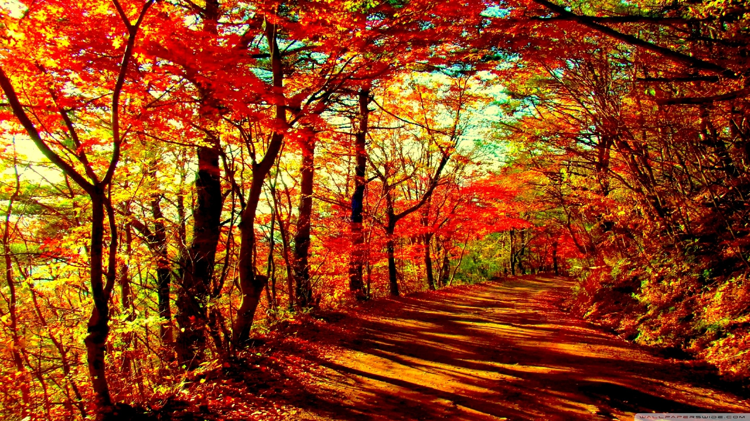 Path in the red forest HD desktop wallpaper Widescreen High