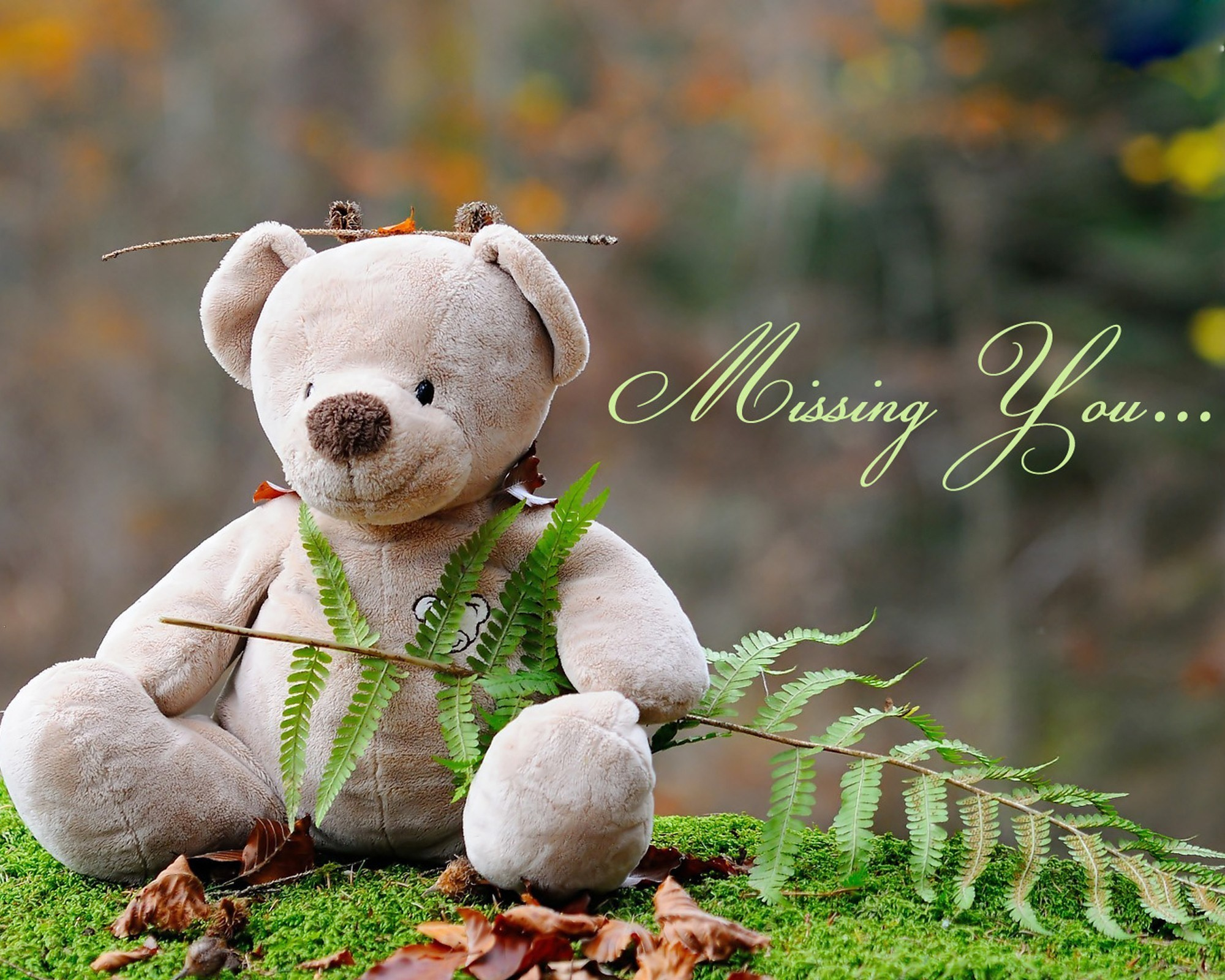 cute teddy bear wallpapers (61+ pictures)