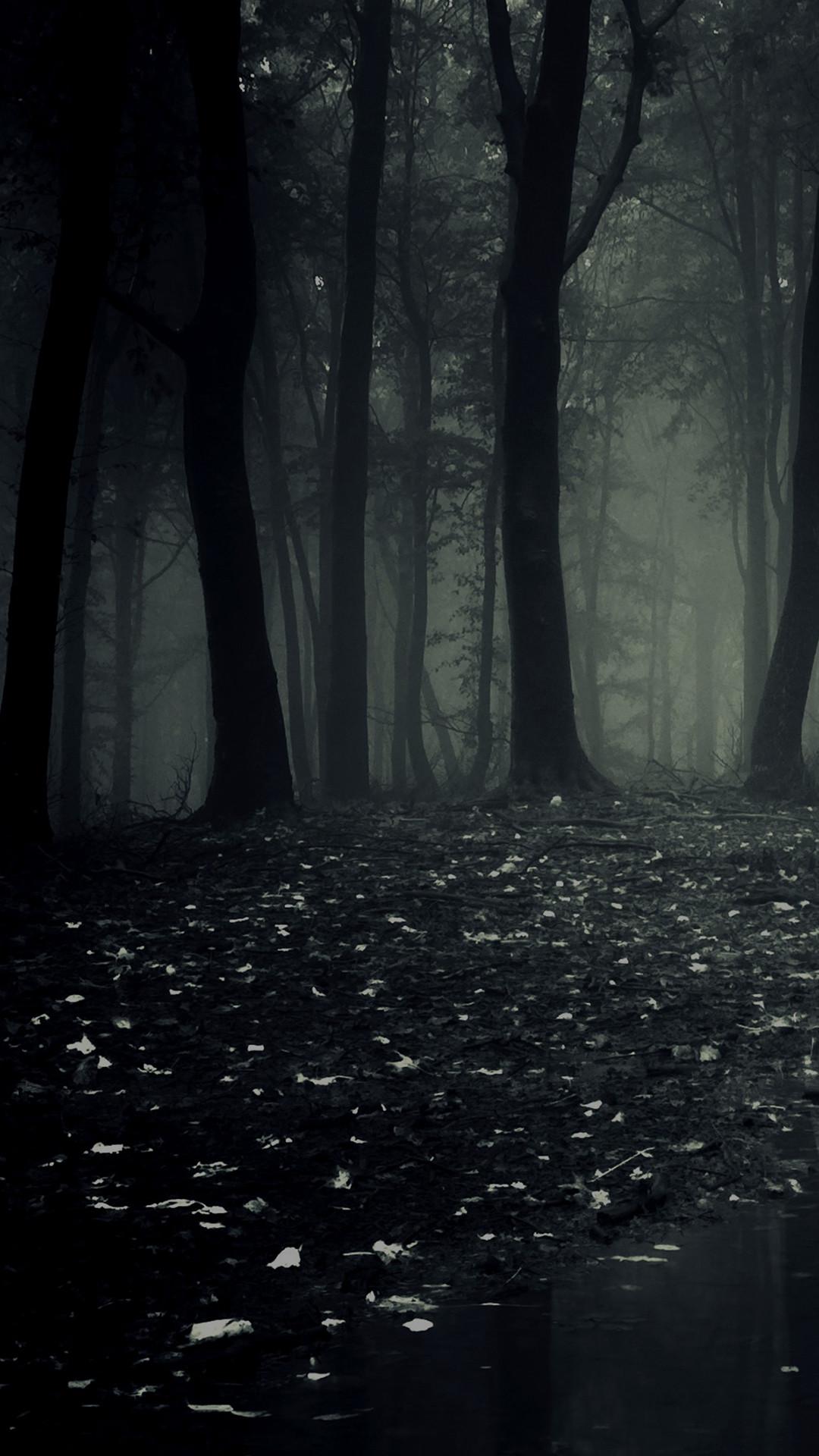 Dark Forest Background 80 Pictures