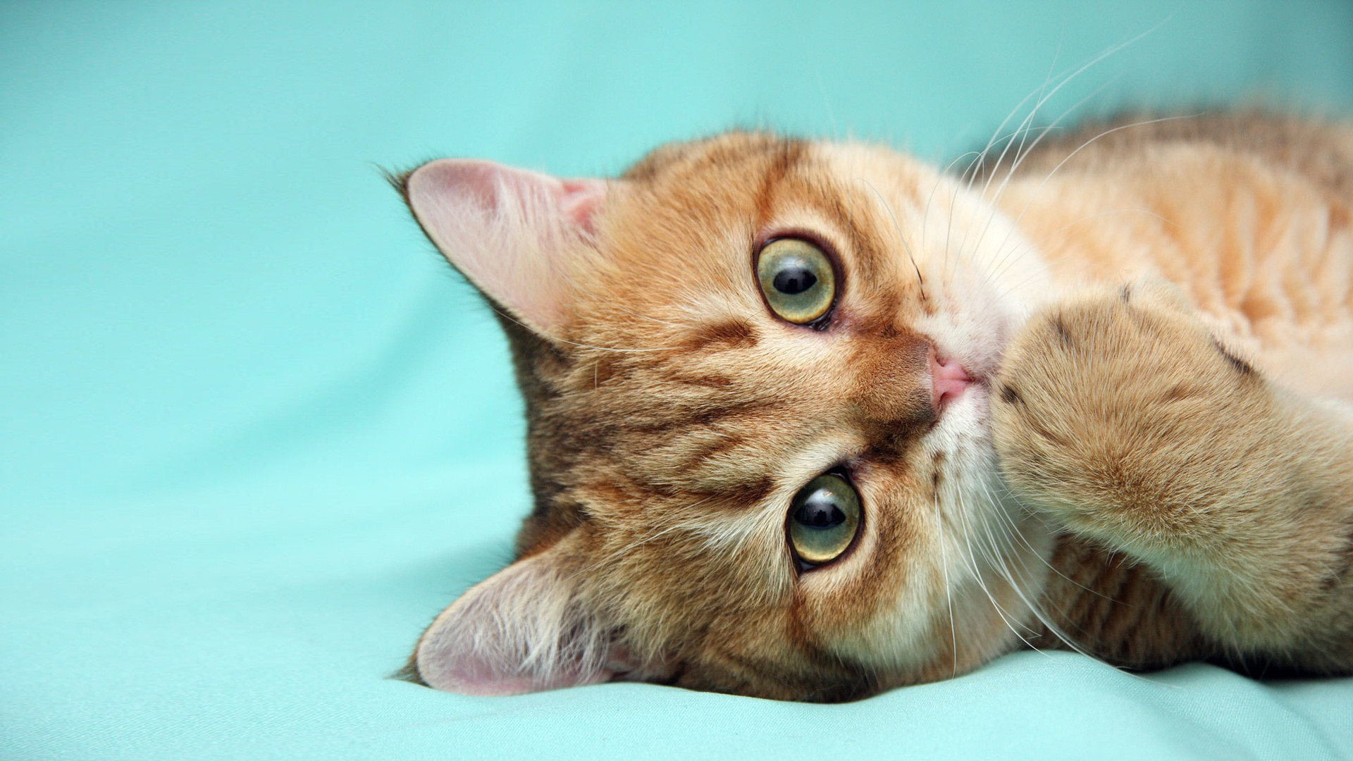 Cute Cat Background (70+ pictures)