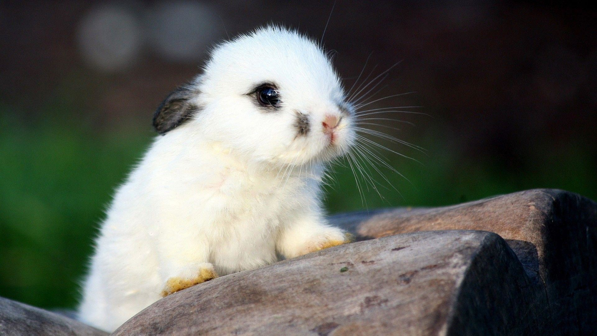 Cute Baby Animal Wallpapers 64 Pictures