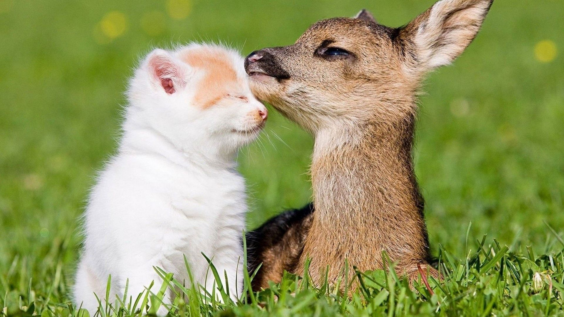 Cute Animal Wallpaper 62 Pictures