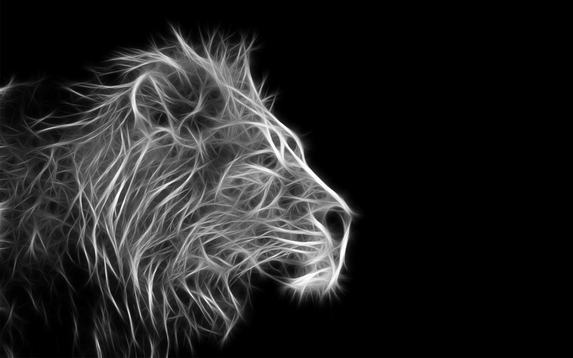 Lion White Background 47 Pictures