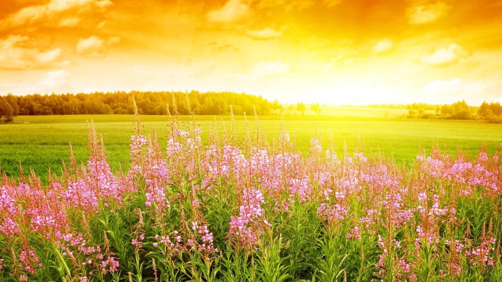 Summer Flowers Wallpaper HD Windows The Wallpaper
