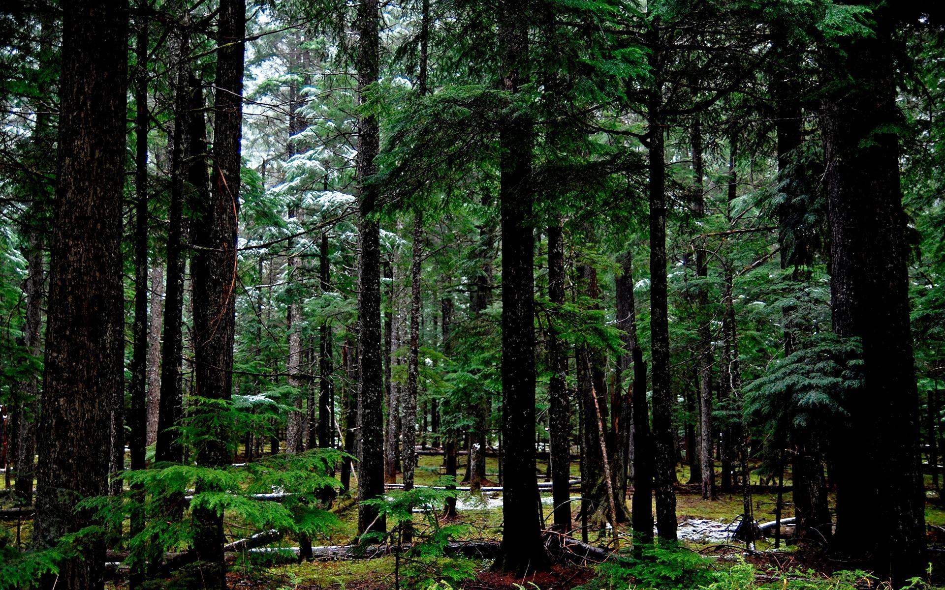 Forest Desktop Wallpaper 75 Pictures